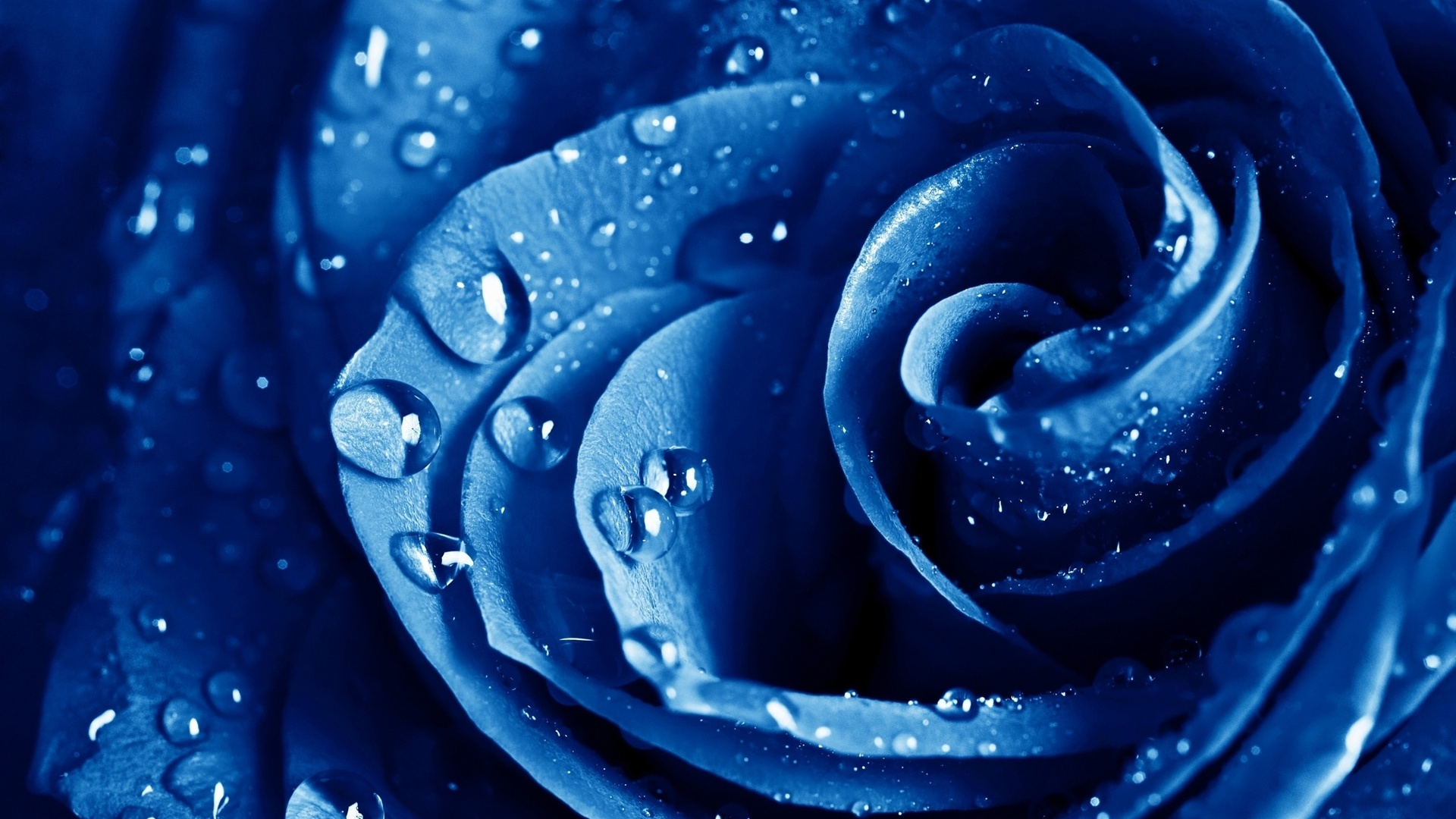 macro blue flower wallpaper - photo #8