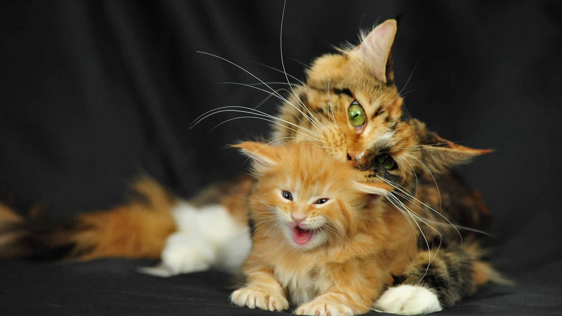 1920x1080 full hd 2k for Koi pond maine coon cattery