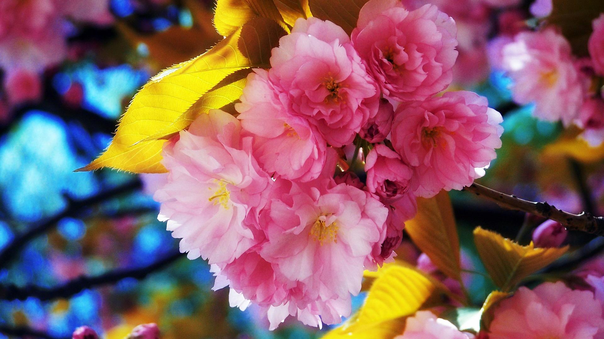 画像 春の季節を感じれる壁紙 1920x1080 spring wallpaper naver