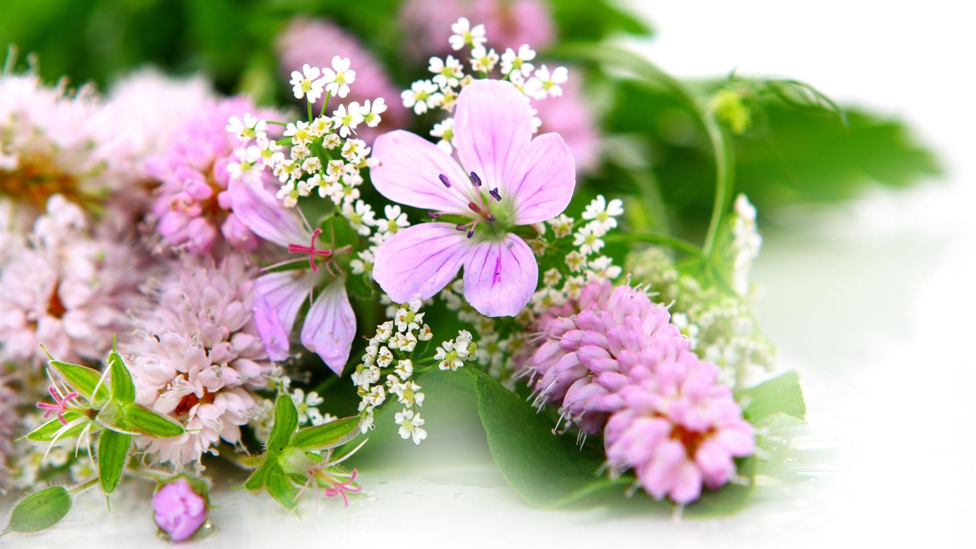 Широкоэкранные обои для рабочего стола цветы