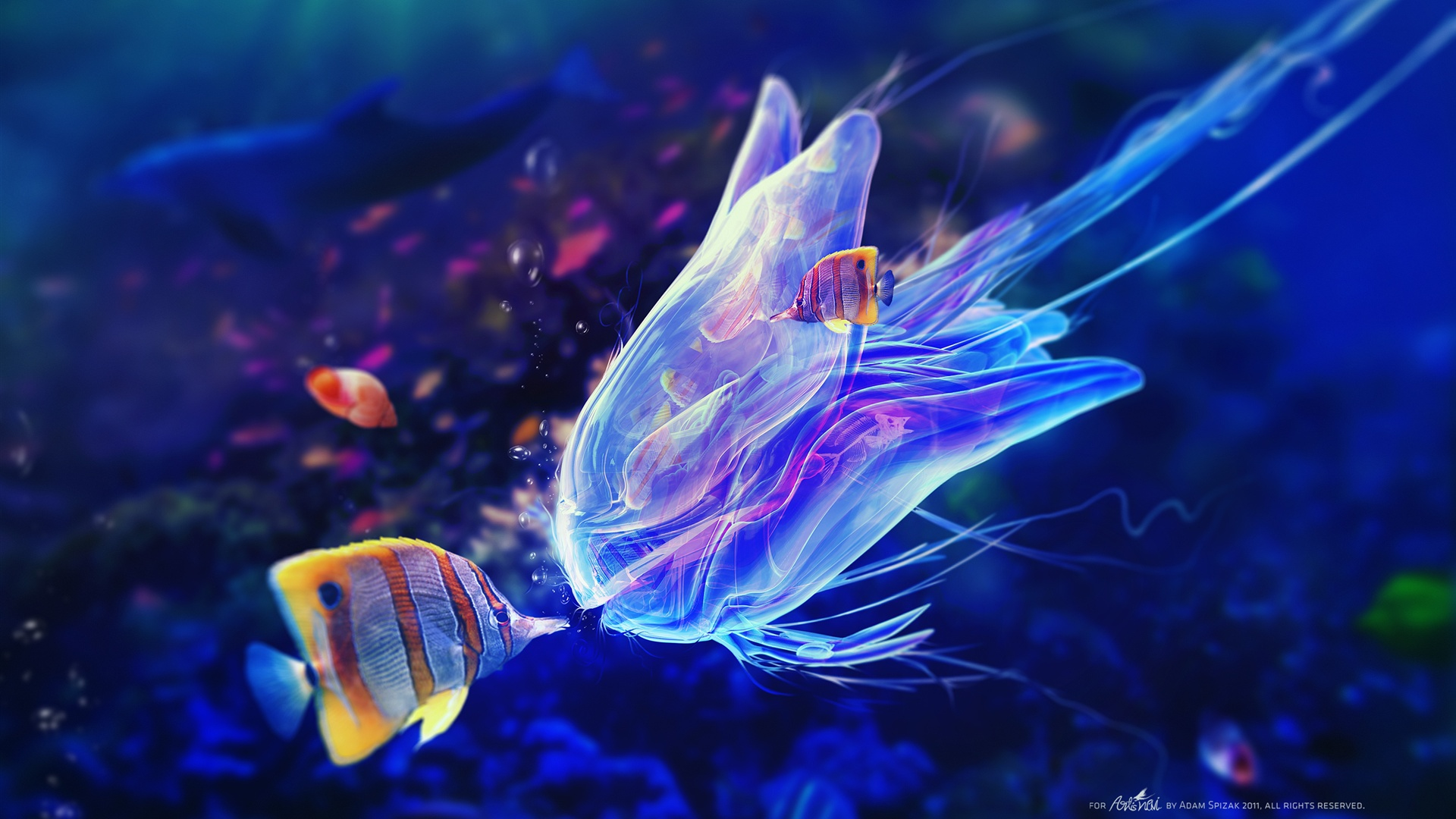Wallpaper download underwater world jellyfish and clown fish wallpaper