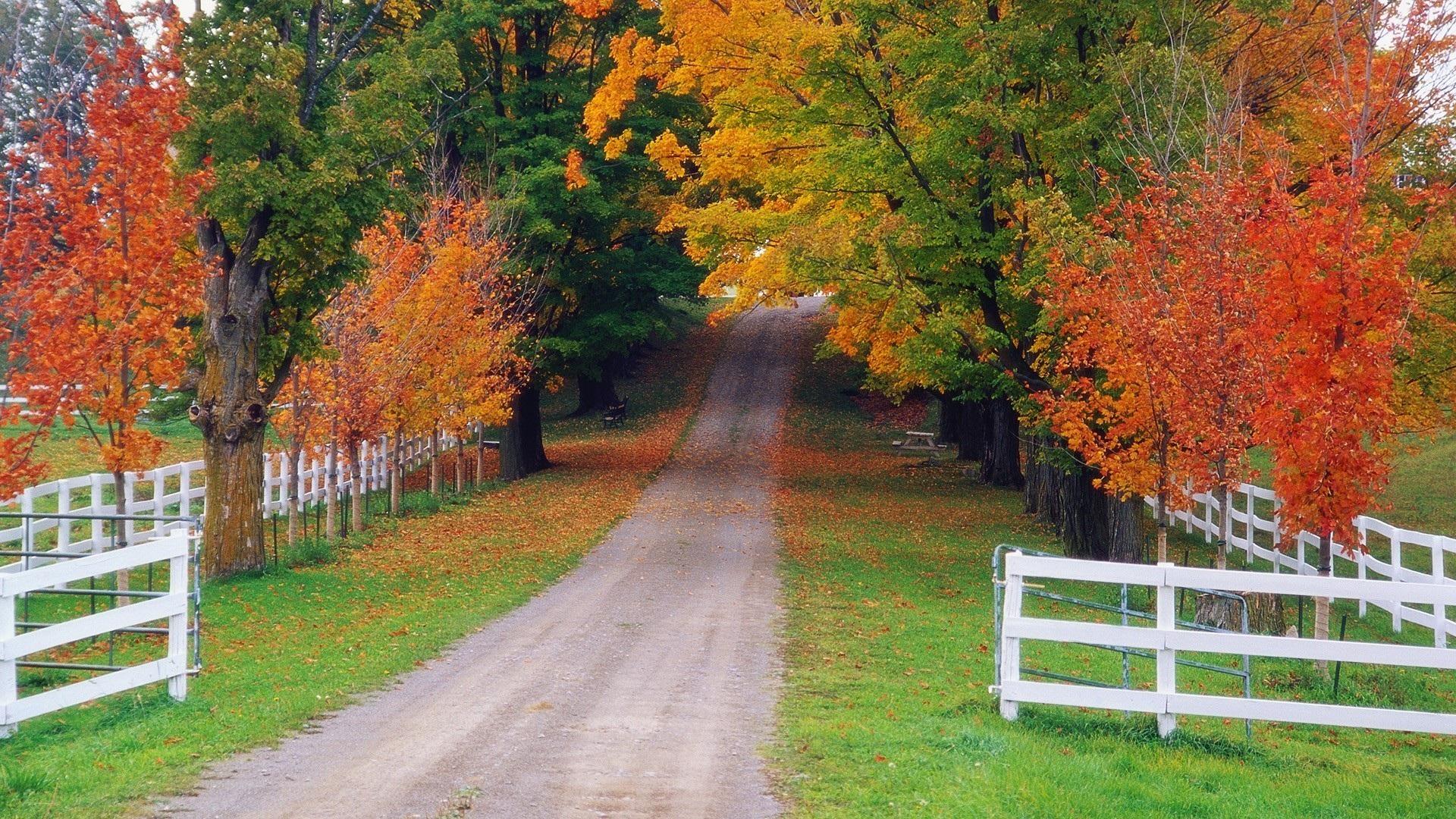 Осенняя природа загрузить
