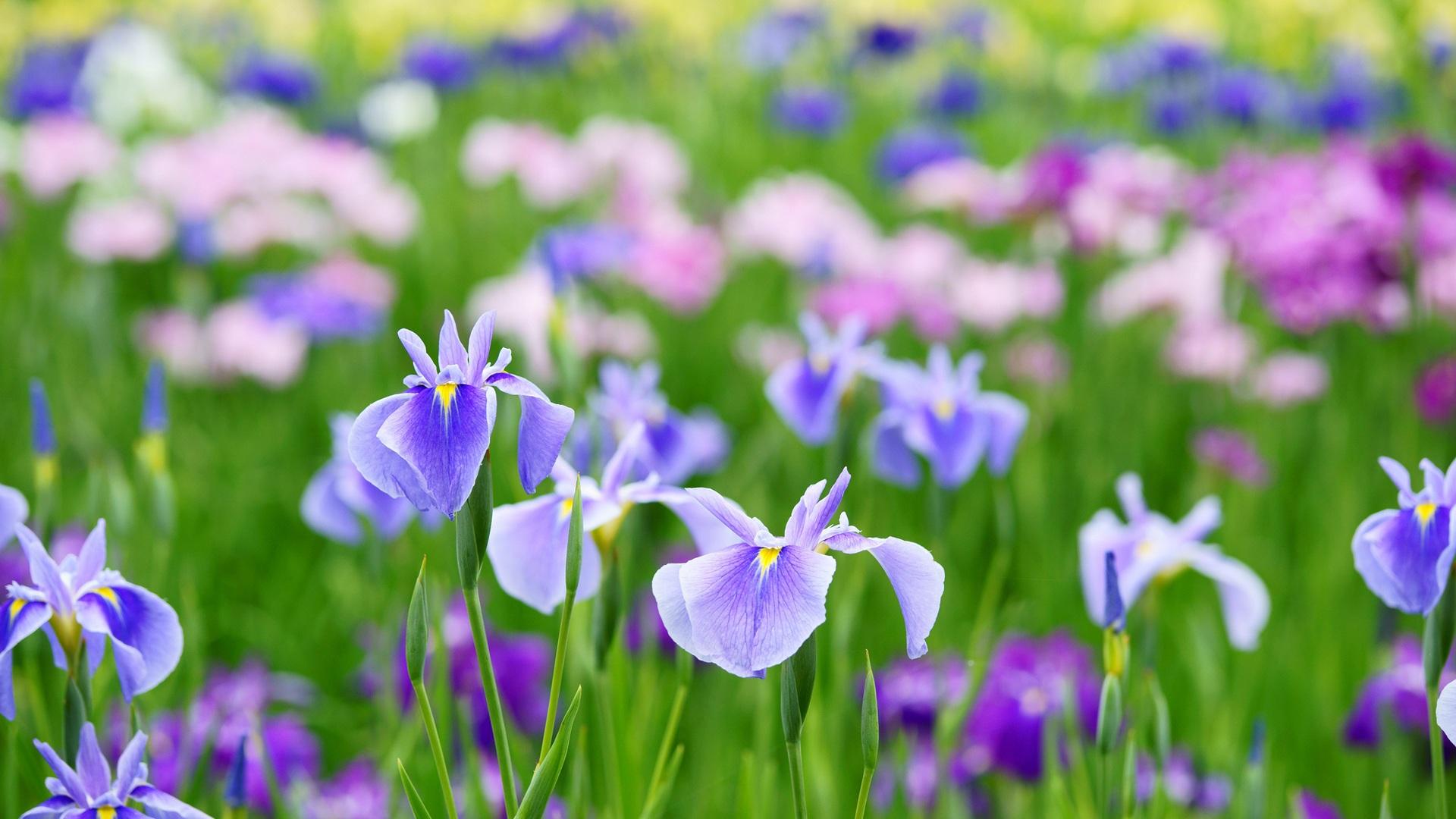 free simple spring flowers - photo #32