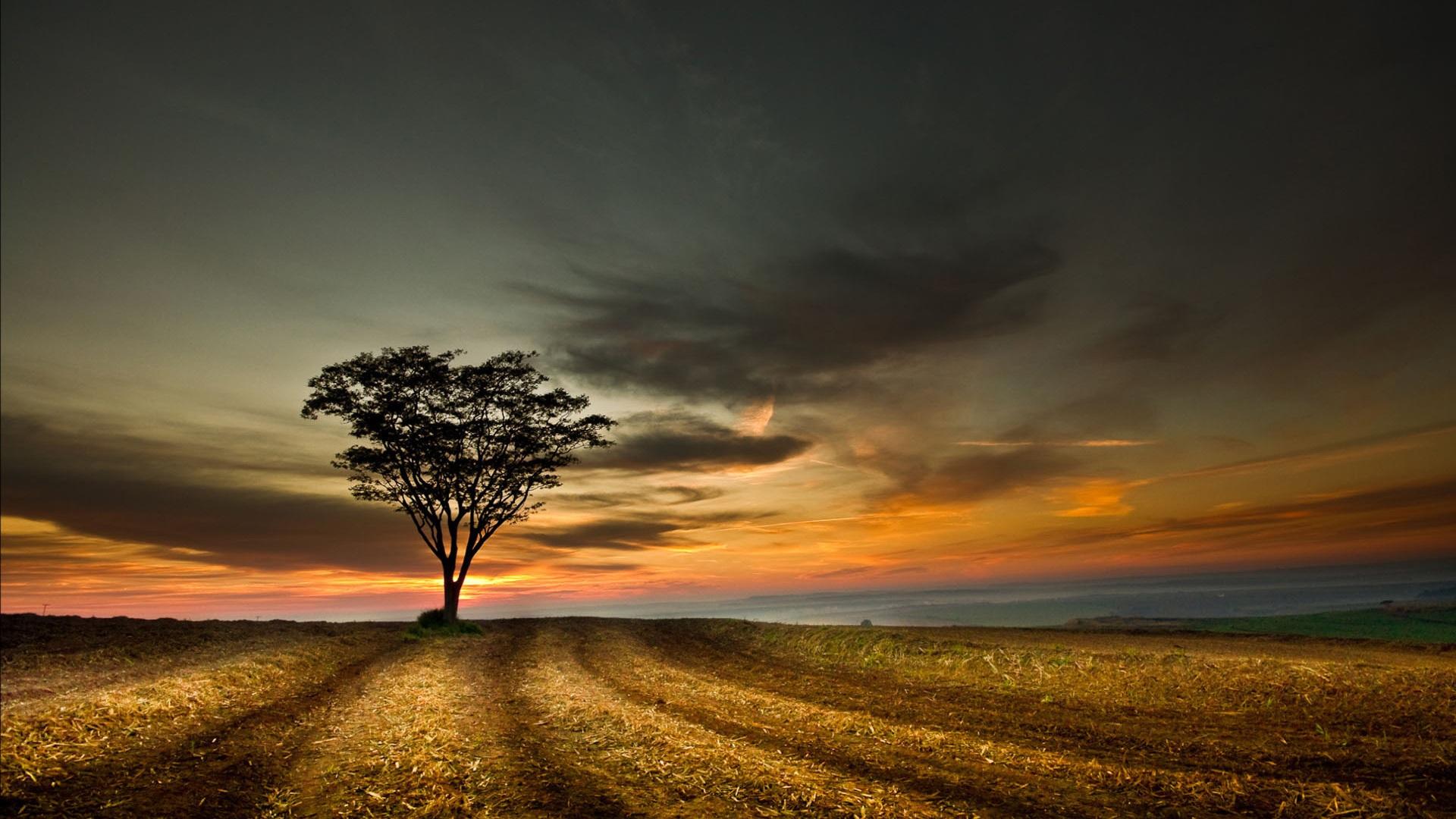 Crepúsculo Paisag...