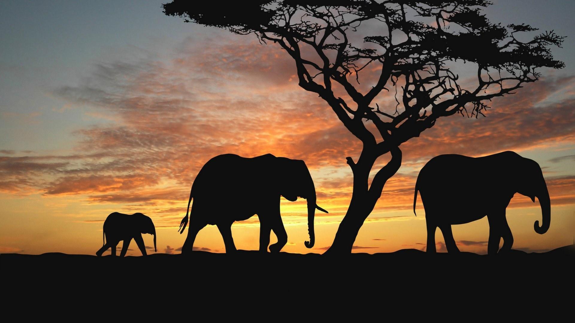 16 Luxury Pubg Wallpaper Iphone 6: 壁纸 夕阳下的大象 1920x1080 Full HD 2K 高清壁纸, 图片, 照片
