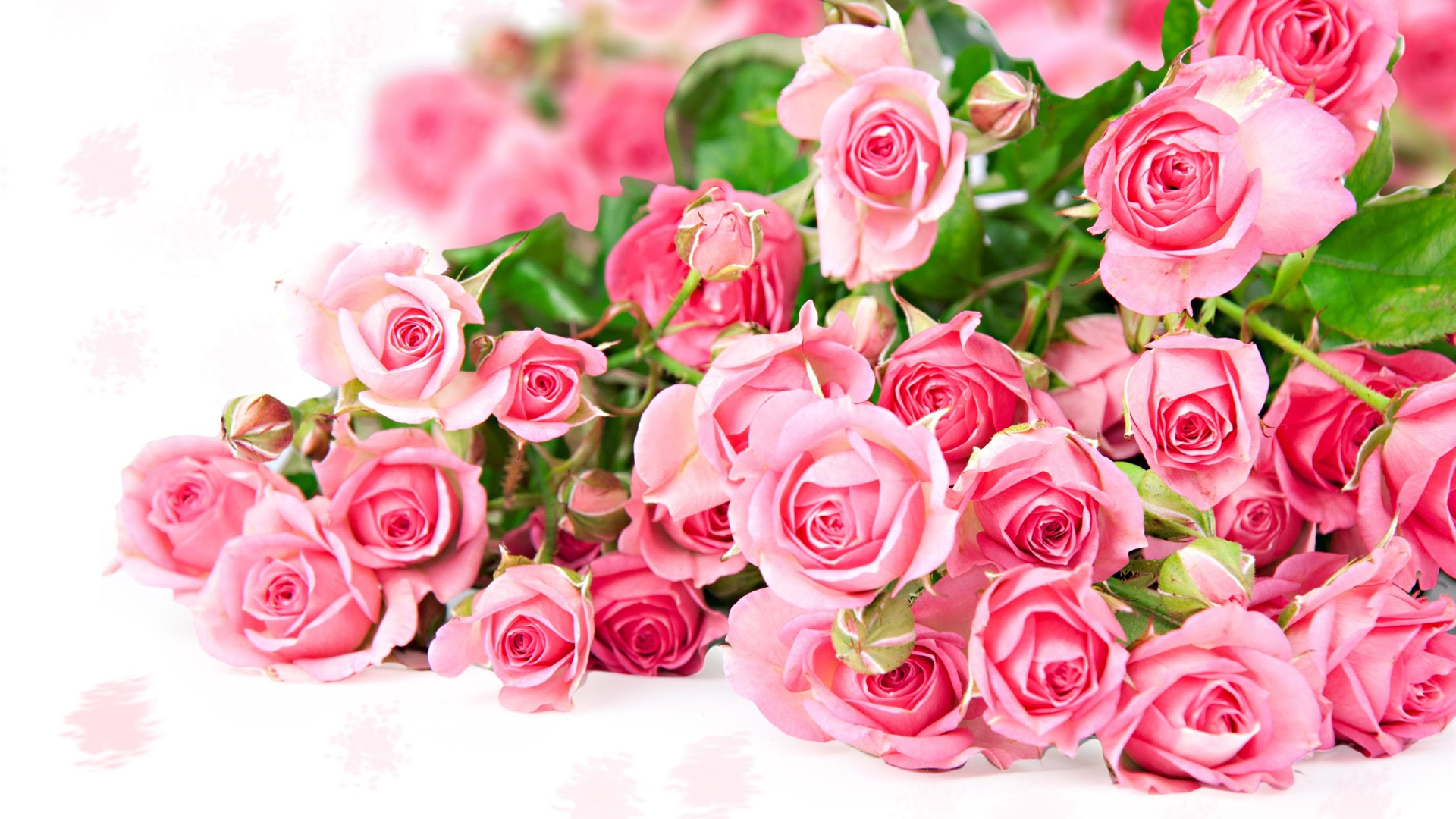 Wallpaper pink rose flower bouquet romantic color 2560x1600 hd wallpaper pink rose flower bouquet romantic color 2560x1600 hd picture image mightylinksfo