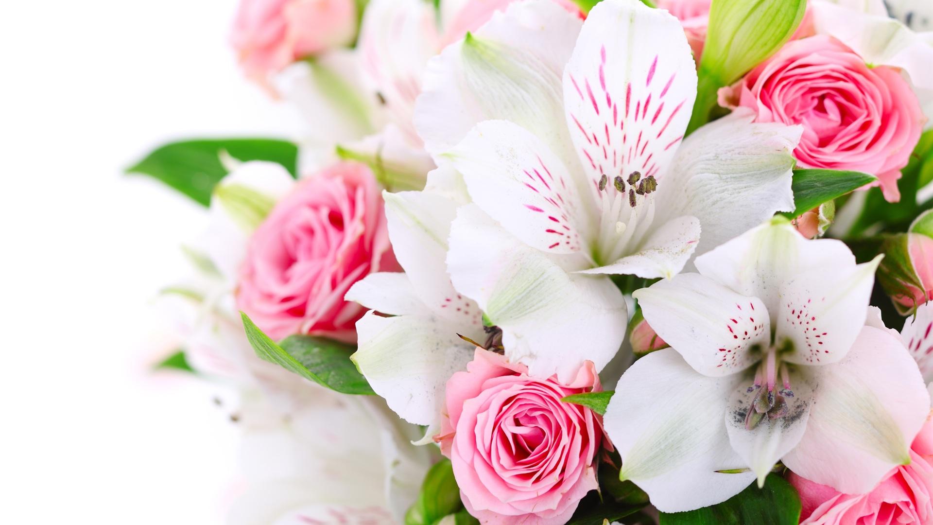 free download wallpaper pink rose