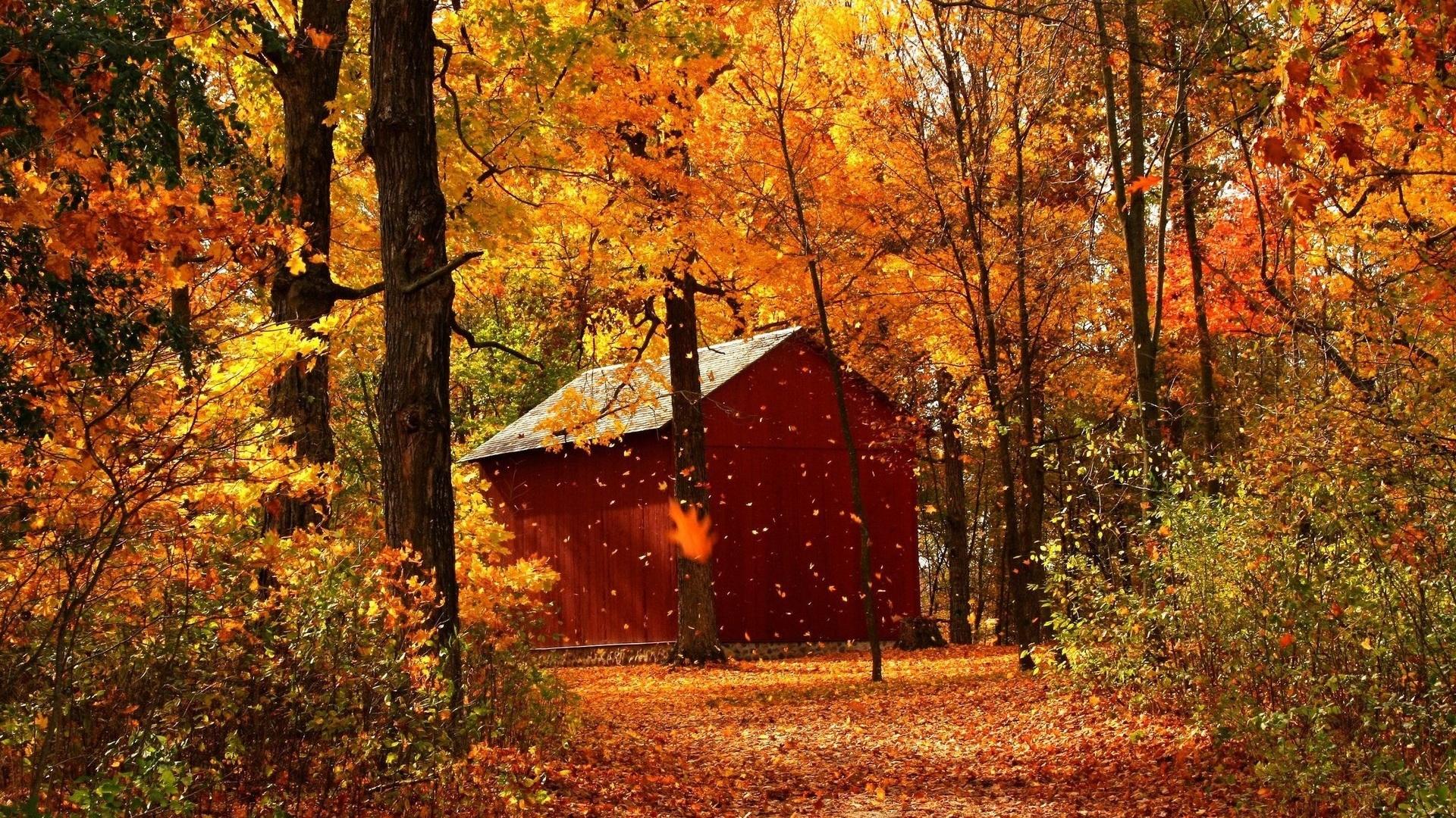 Осення дорожка лесу подборки
