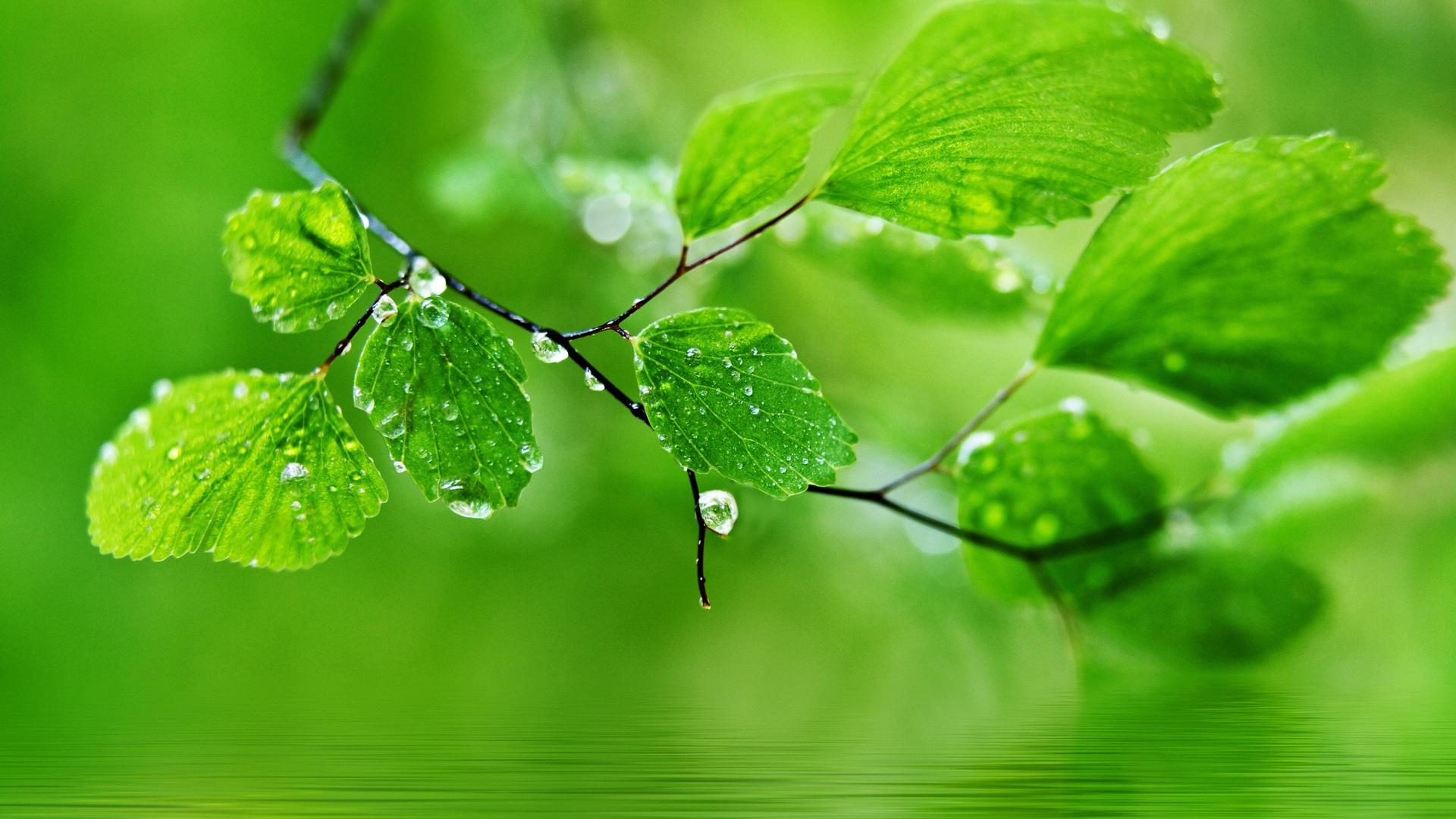 tema de fondo verde gotas de agua sobre las hojas fondos