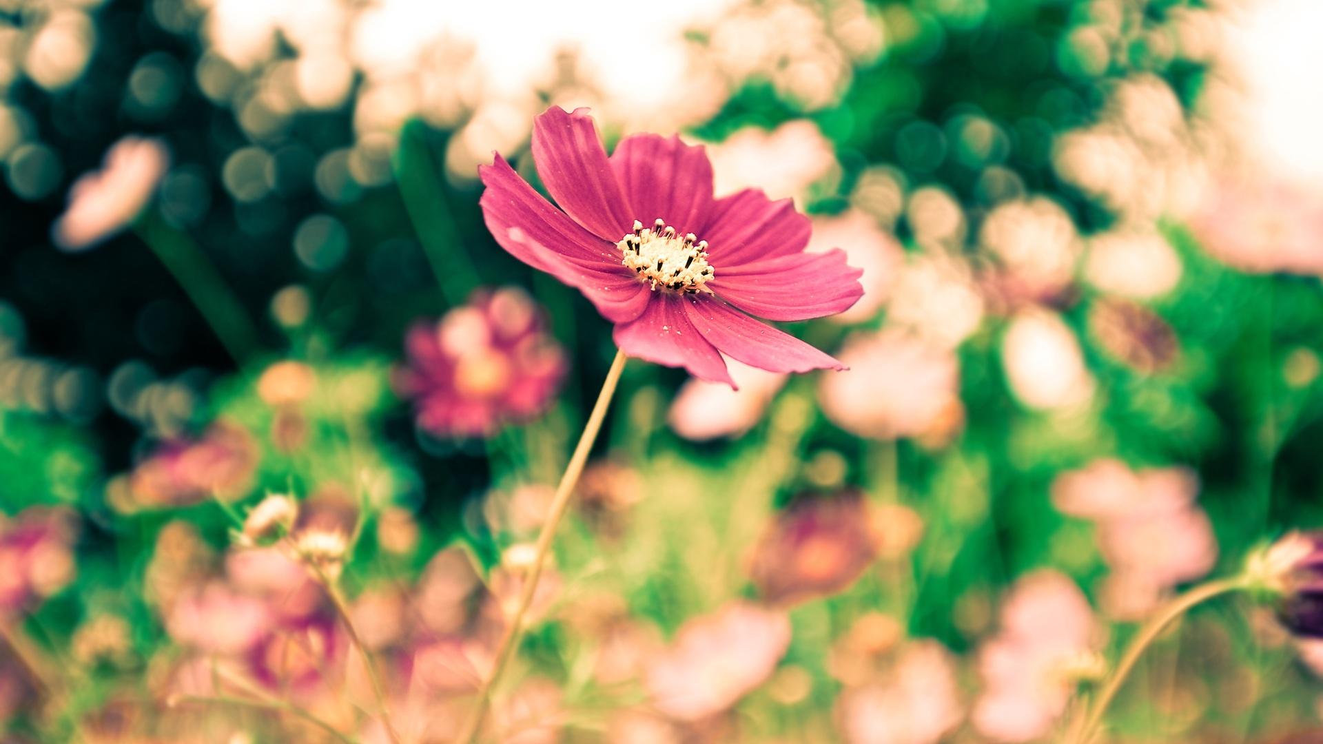 公園赤い花ぼかし写真撮影 Pc壁紙 オトナ女子向け オシャレな