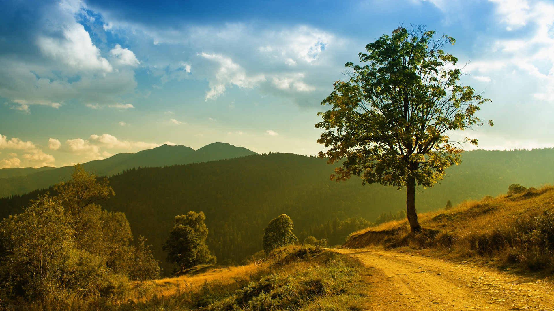 wallpaper mountain forest trees landscape, grass footpath, morning
