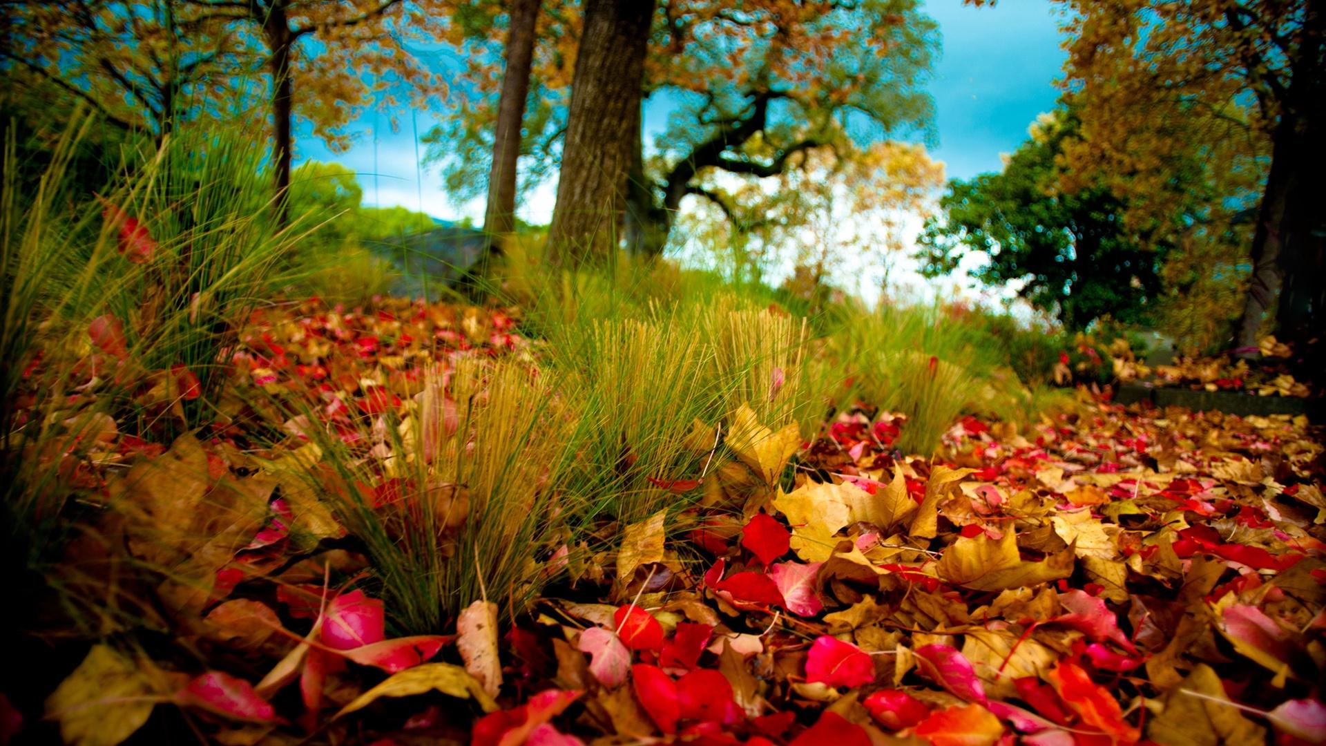 壁紙 秋の森 秋は草の葉 2560x1600 Hd 無料のデスクトップの背景 画像