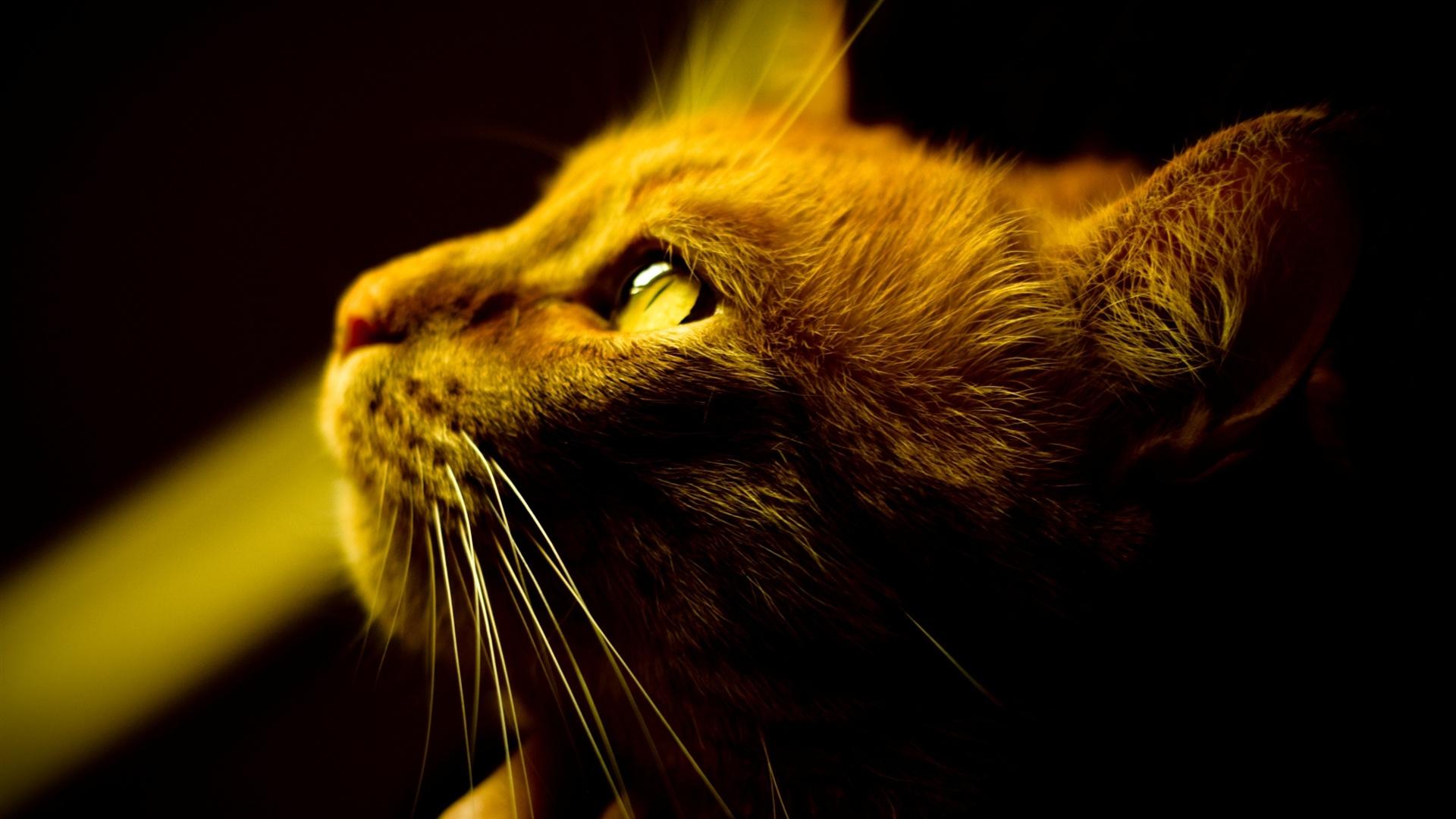 16 Luxury Pubg Wallpaper Iphone 6: 壁紙 茶色の猫の目、顔のクローズアップ、黄色目 2560x1600 HD