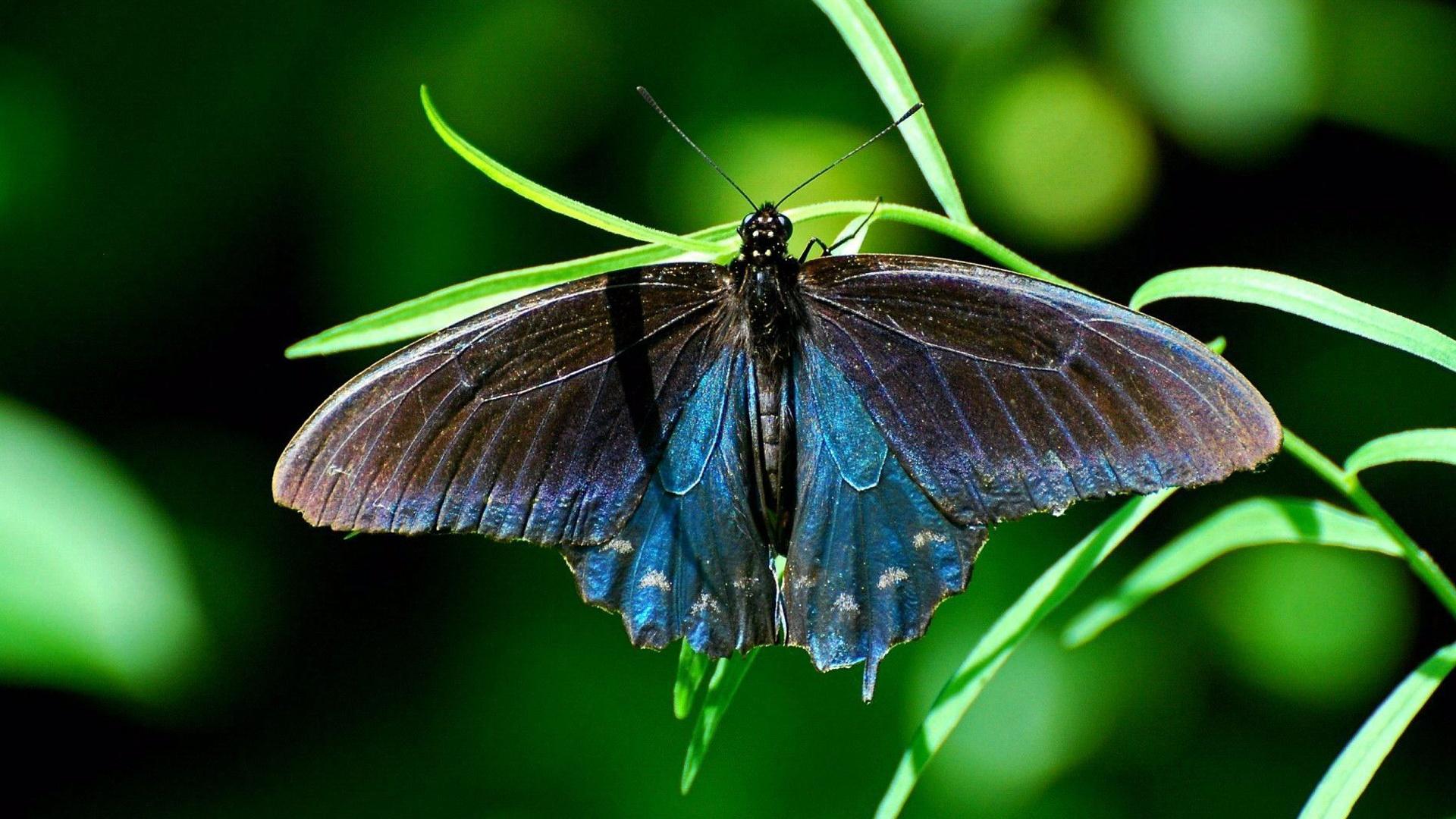 природа животные насекомое бабочки ветка nature animals insect butterfly branch в хорошем качестве