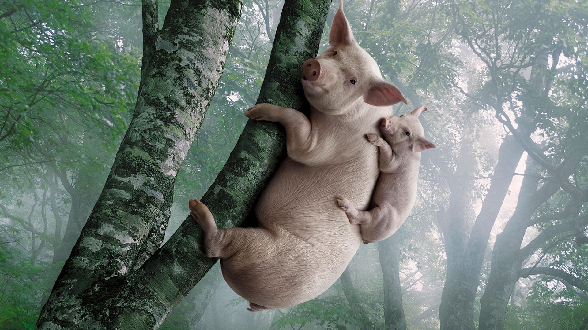 роспись рюкзака свинка пеппа и джордж