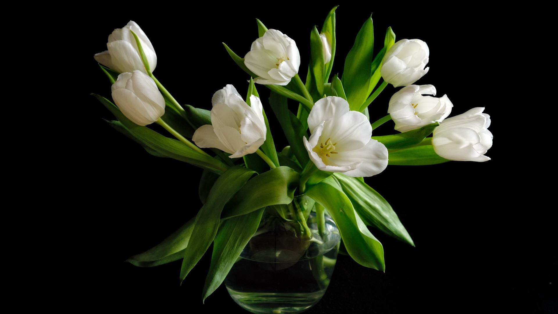 Download Wallpaper 1920x1080 Vase, white tulip flowers ...