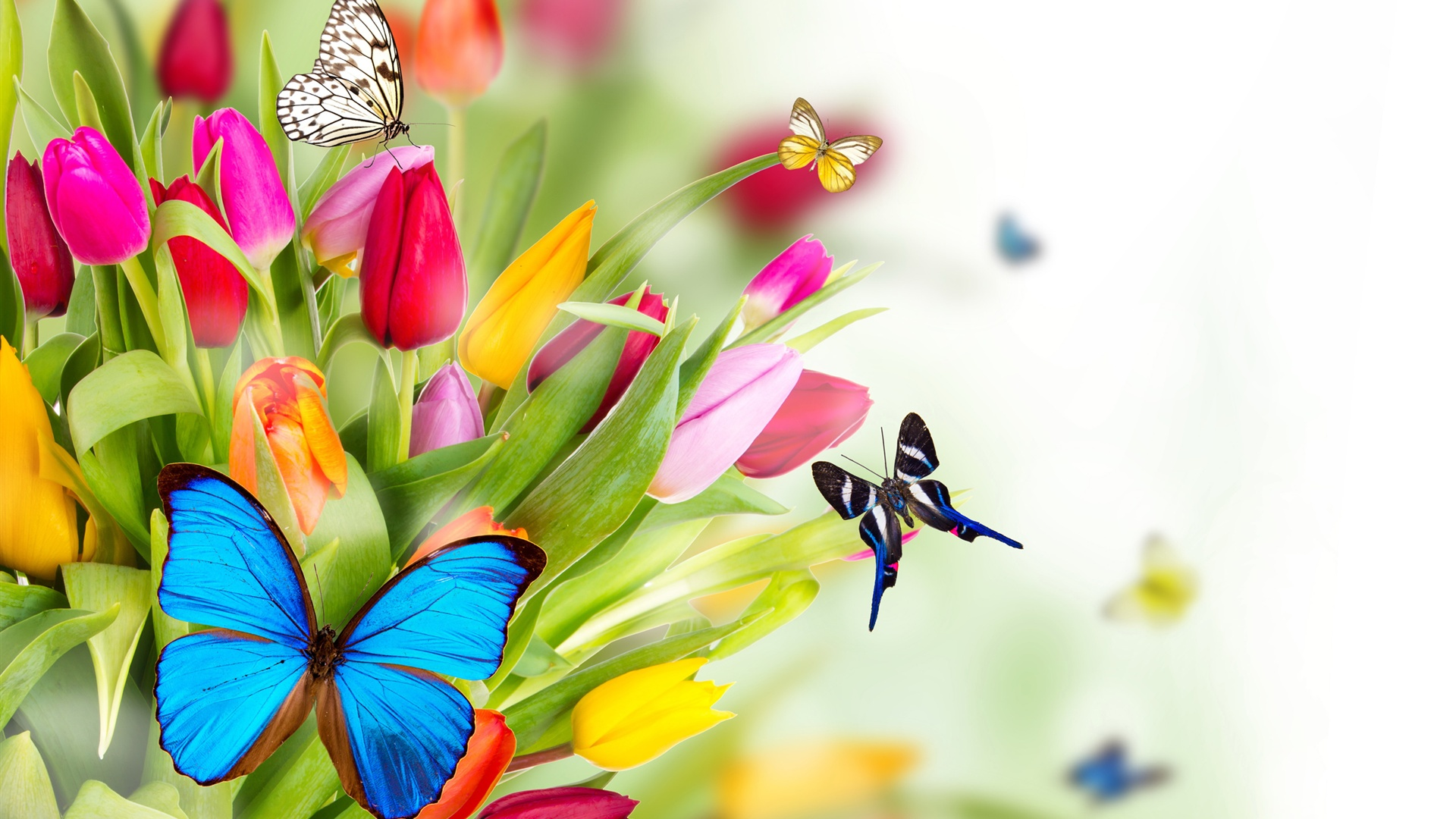 Wallpaper Tulip Flowers And Butterfly 2560x1600 Hd Picture Image