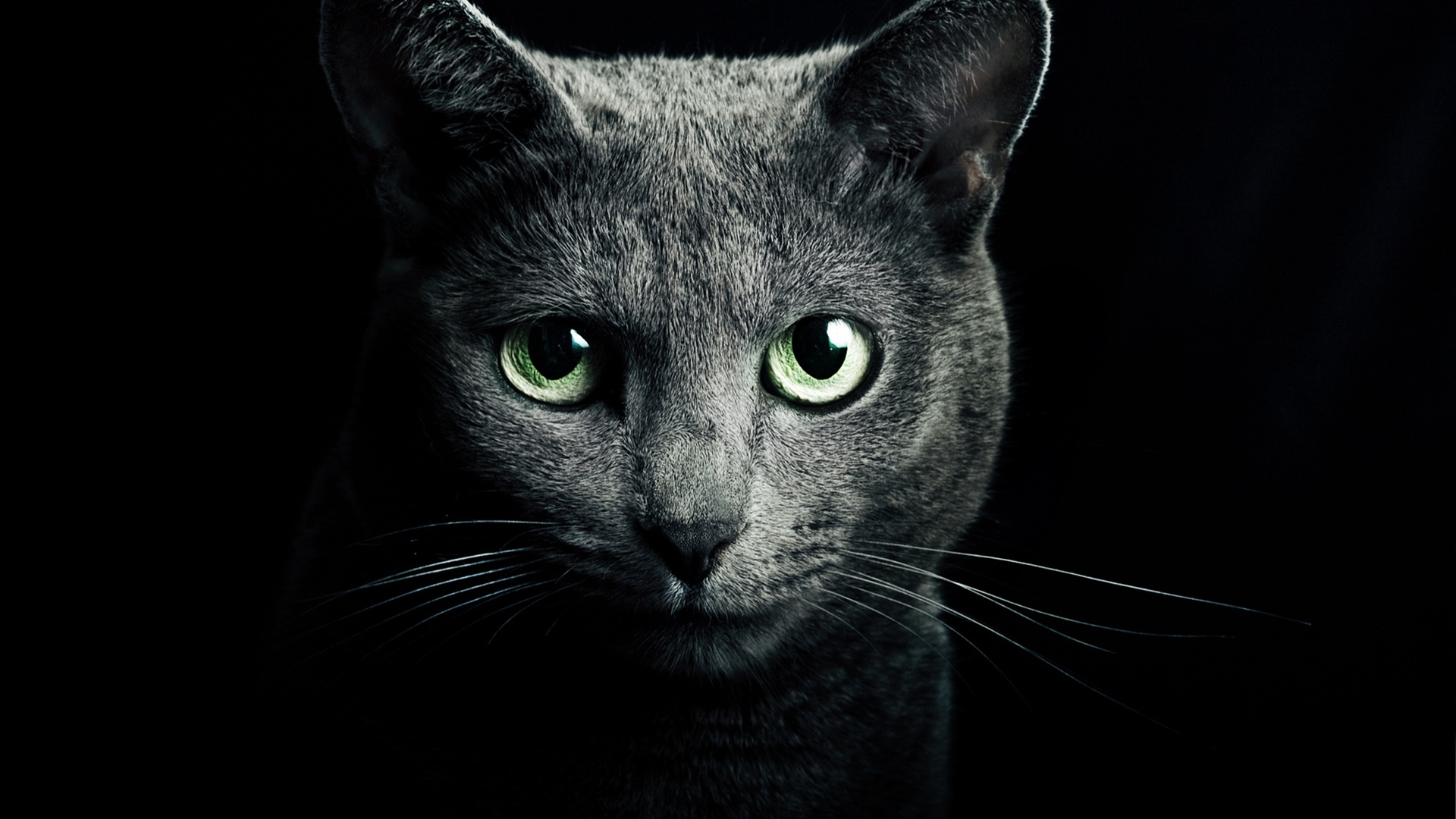 Black Cat Eyes Wallpaper: Wallpaper Black Cat, Green Eyes, Black Background