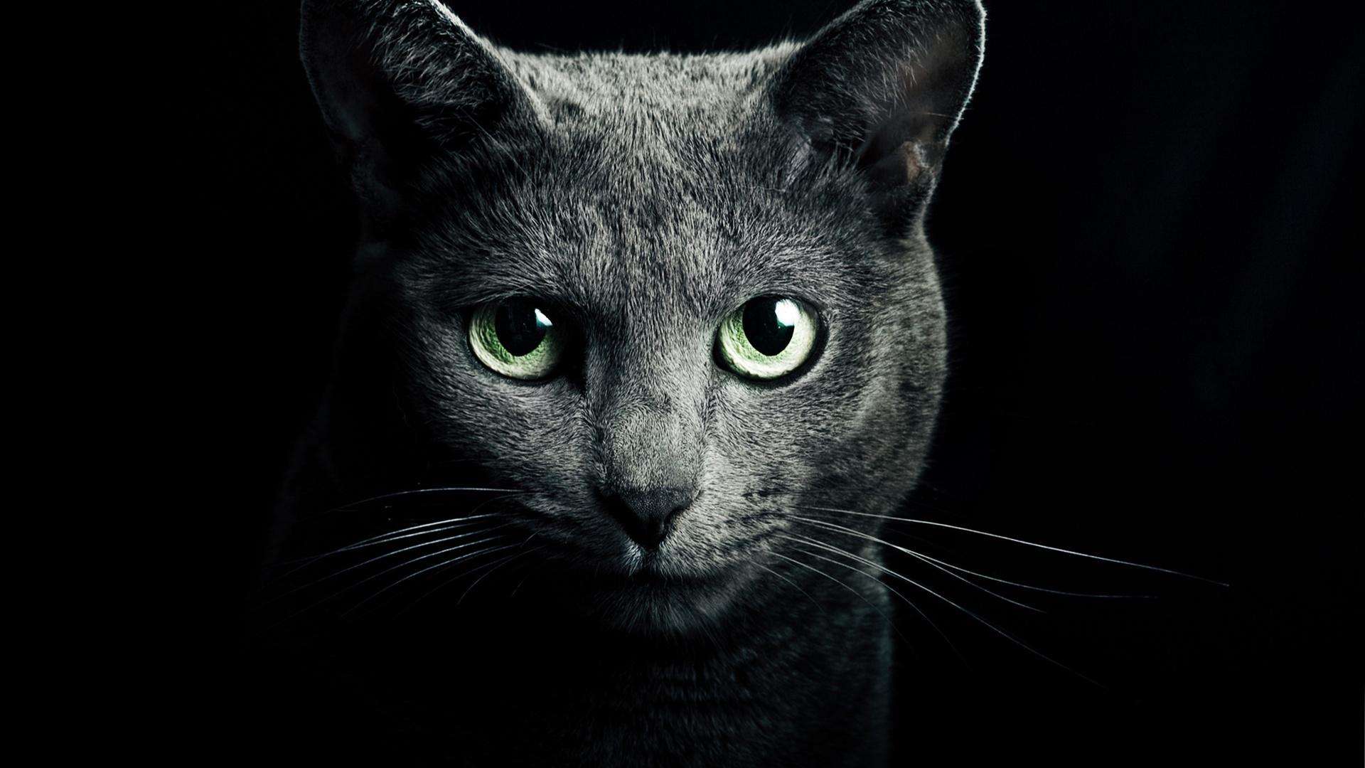 黒猫、緑、目、黒、背景 壁紙 - 1920x1080    1920x1080 壁紙ダウンロード