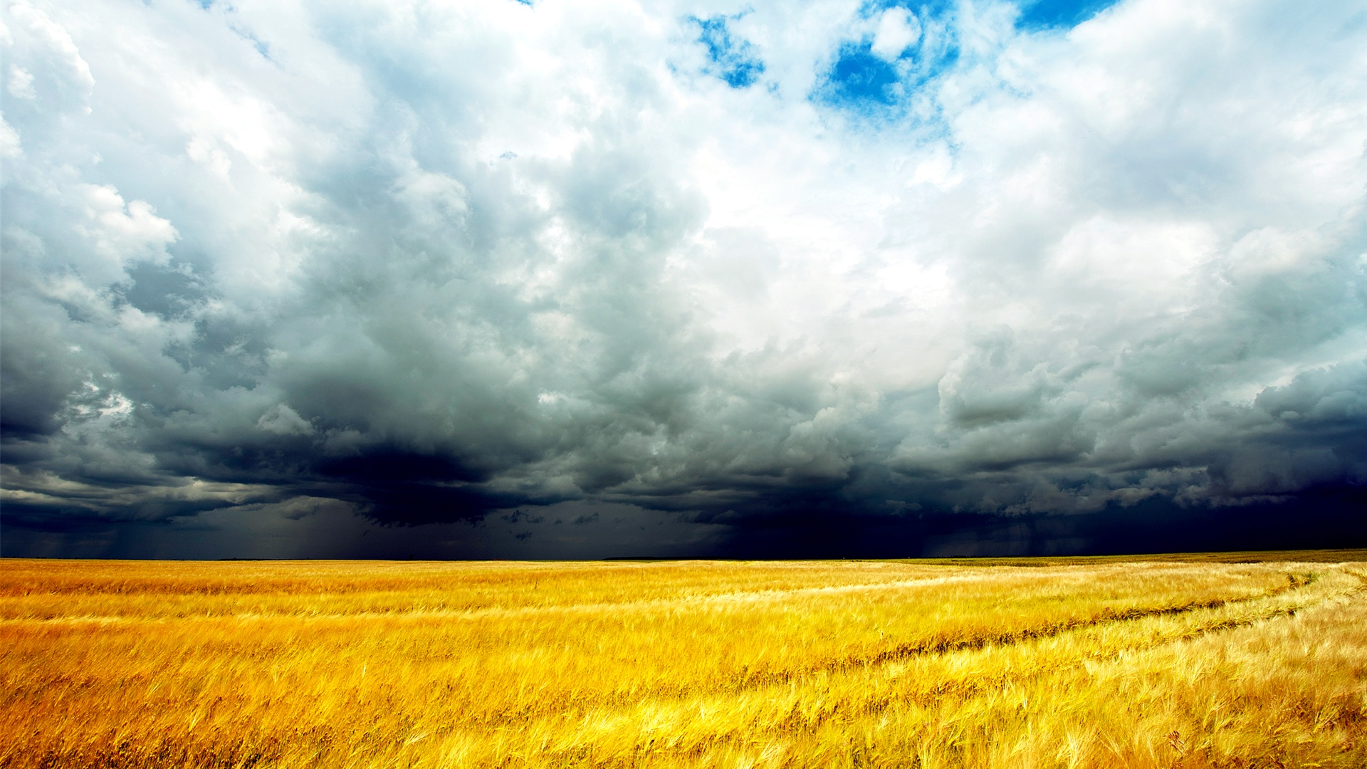 wallpaper golden wheat fields  clouds sky  storm coming 2560x1600 hd picture  image