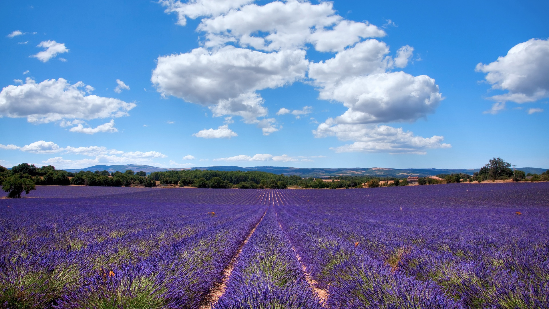download hintergrundbilder 1920x1080 full hd lavendel in der provence frankreich hd hintergrund. Black Bedroom Furniture Sets. Home Design Ideas