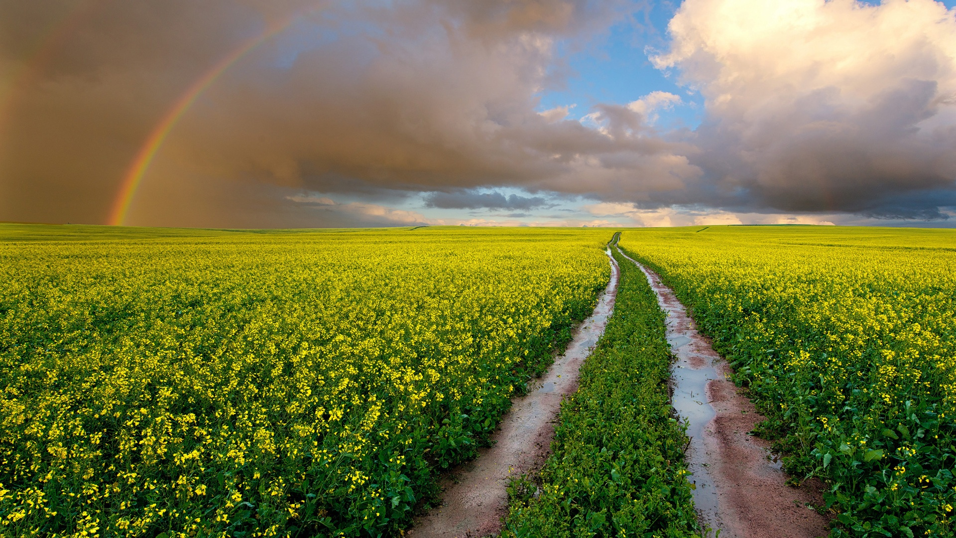 what to do with a wet iphone wallpaper south africa fields road rapeseed flowers 6098