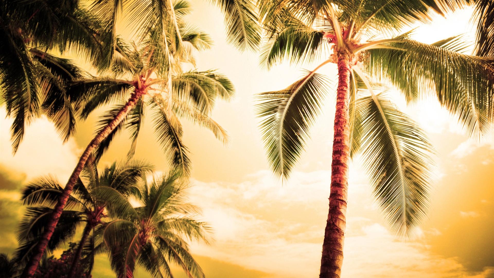 Tropics Palm Trees Sun Beach 4k Hd Desktop Wallpaper For: 壁紙 ハワイ、暑い夏には、ヤシの木 2560x1600 HD 無料のデスクトップの背景, 画像
