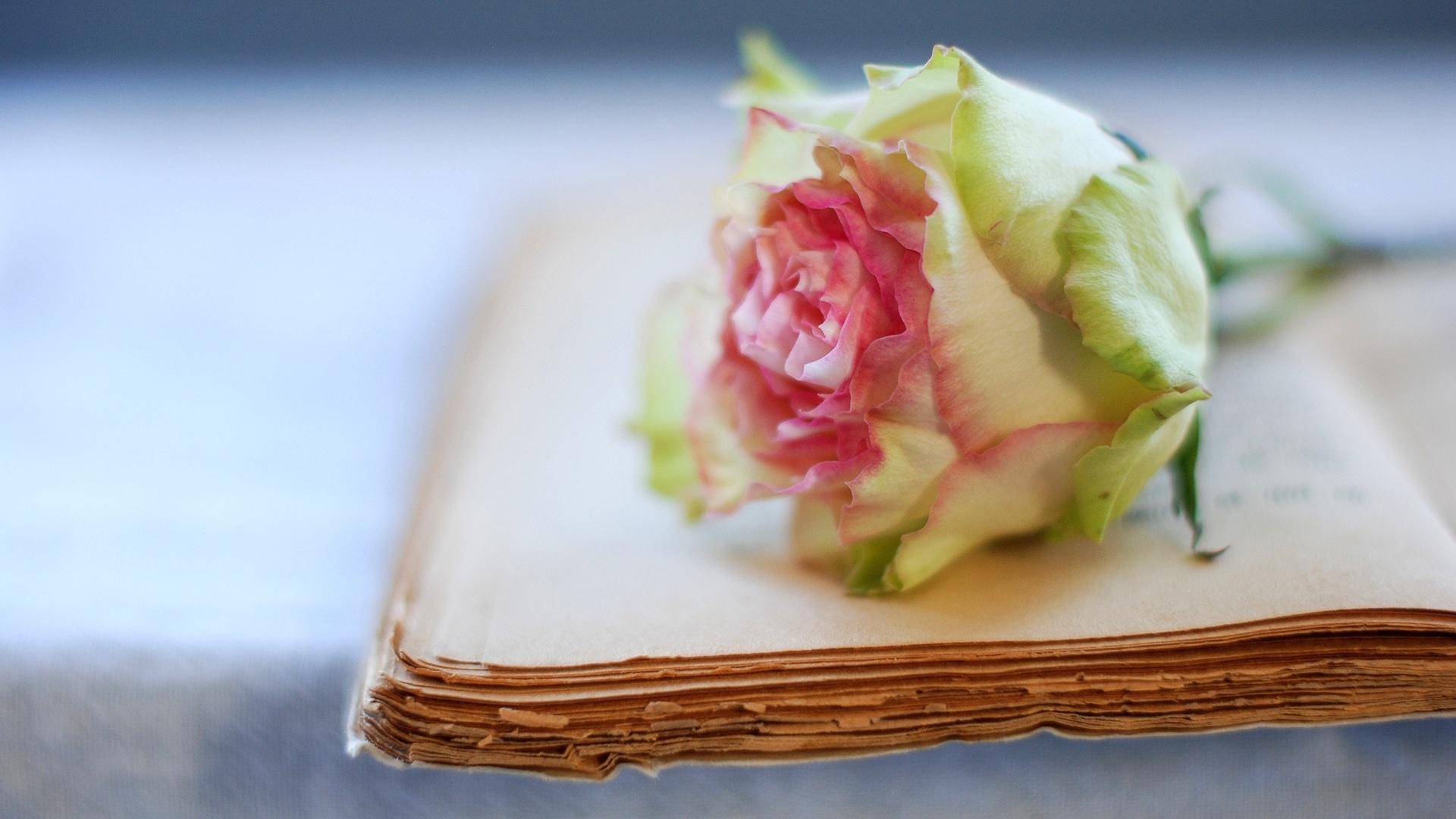 Цветок в книге  № 1489049 загрузить