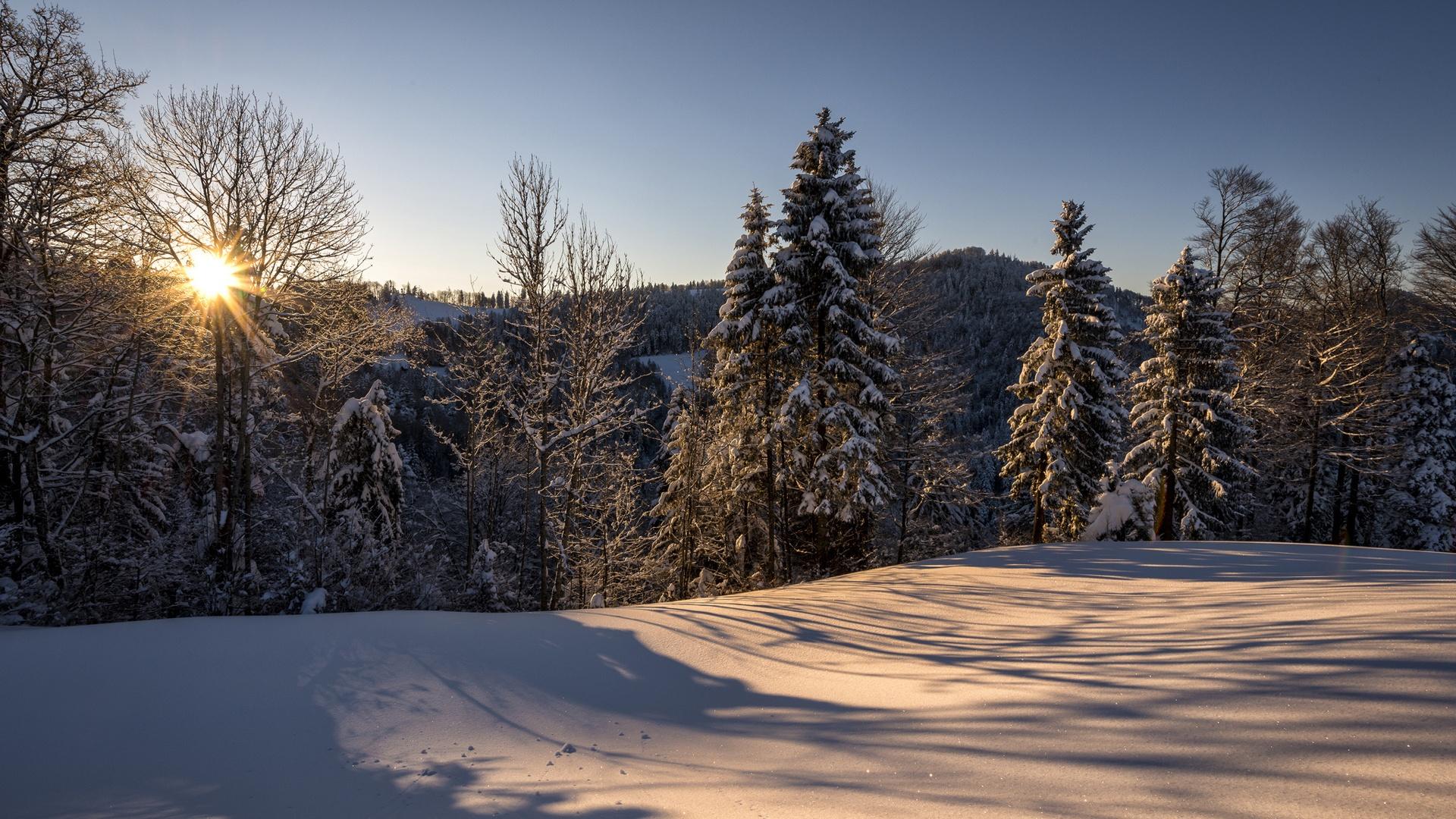Winter landscape morning sun forest snow wallpaper 1920x1080