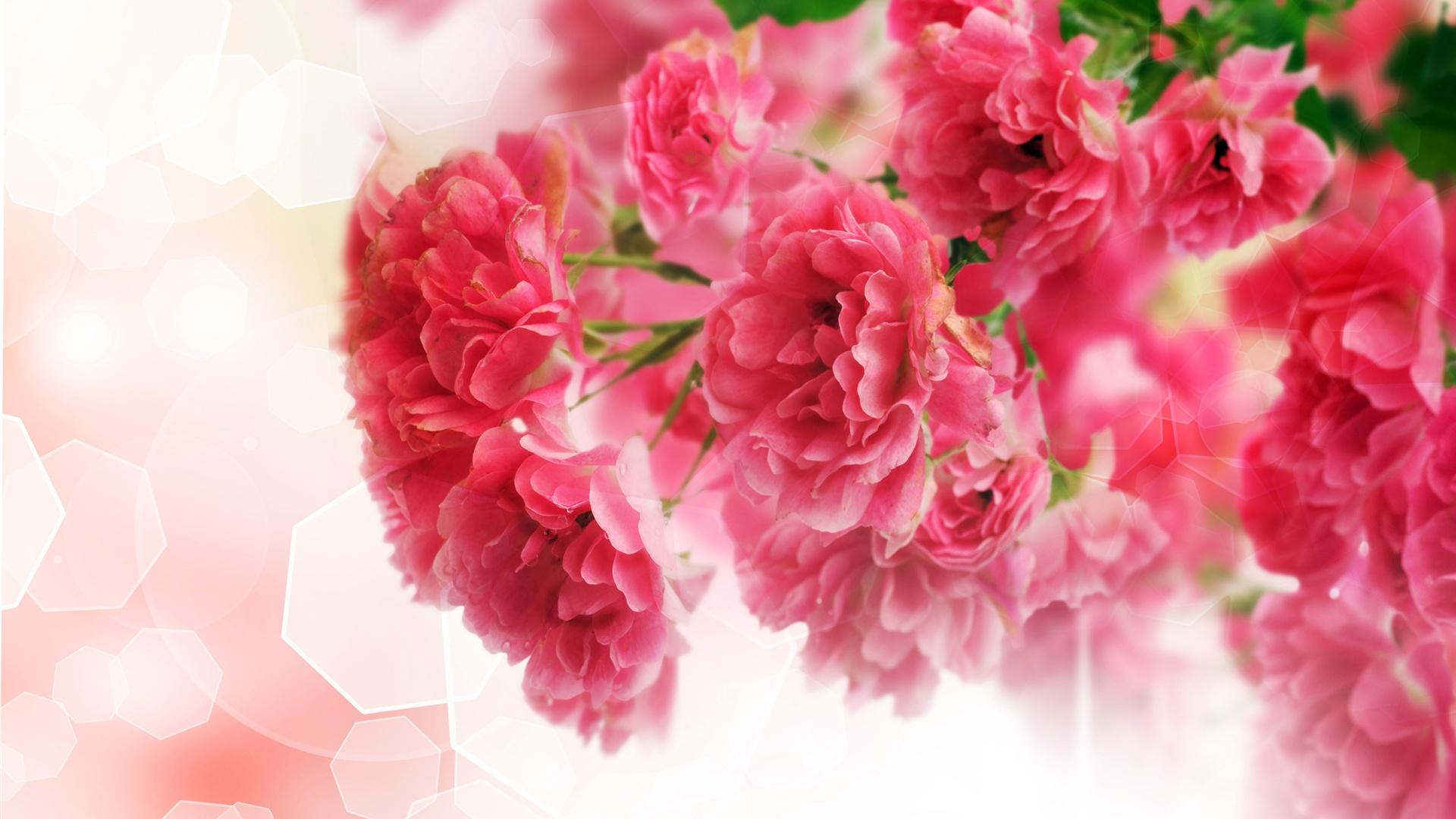 close up de fleurs d 39 oeillets roses fonds d 39 cran 1920x1080 full hd fonds d 39 cran de. Black Bedroom Furniture Sets. Home Design Ideas