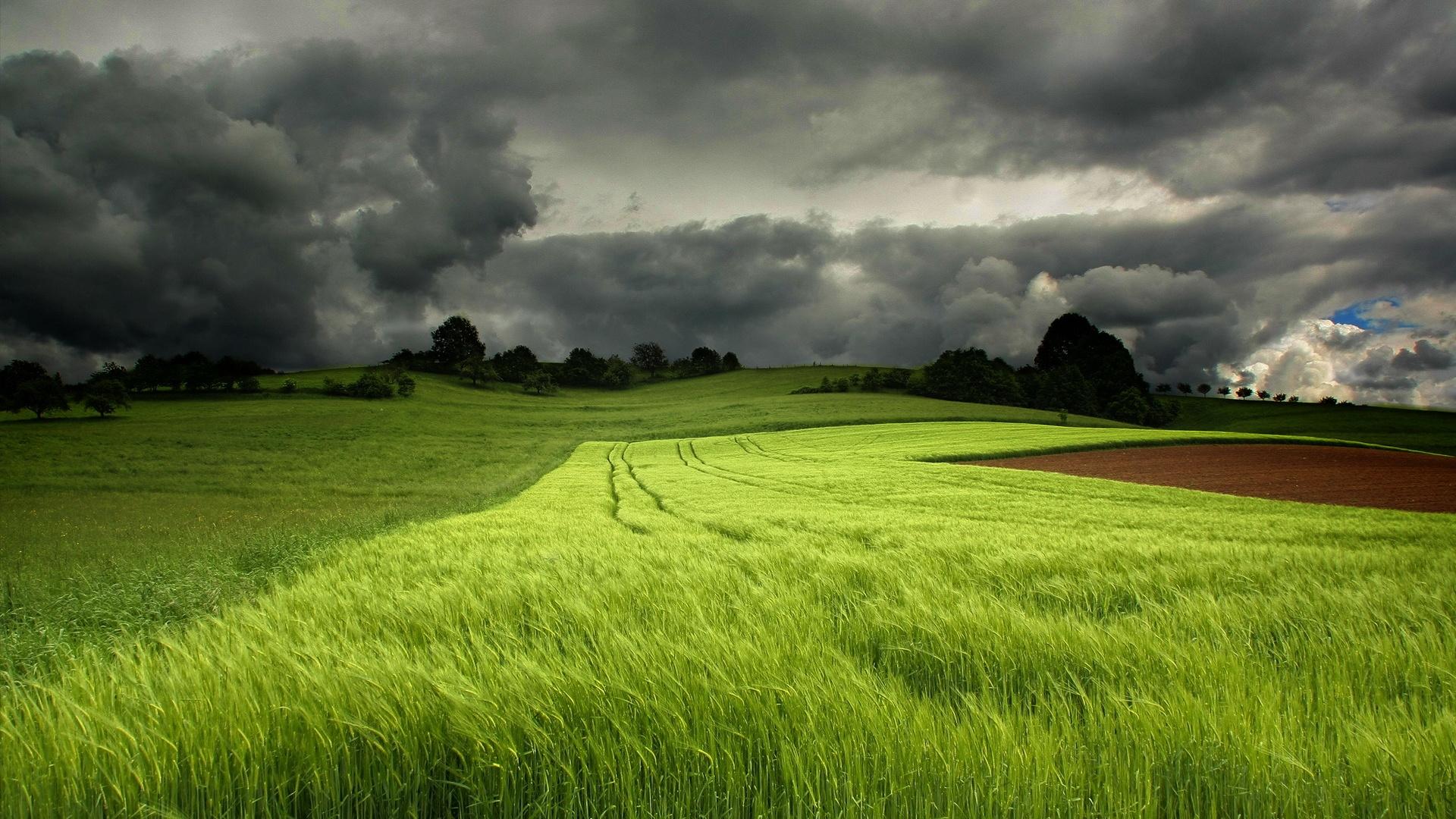Summer green fields cloudy sky wallpaper 1920x1080 full hd resolution wallpaper download - Wallpaper pictures ...
