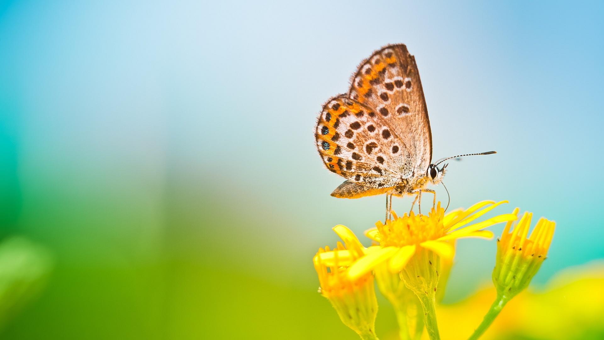 Primavera borboleta, flor amarela, fundo borrado Papéis de Parede ... Yellow