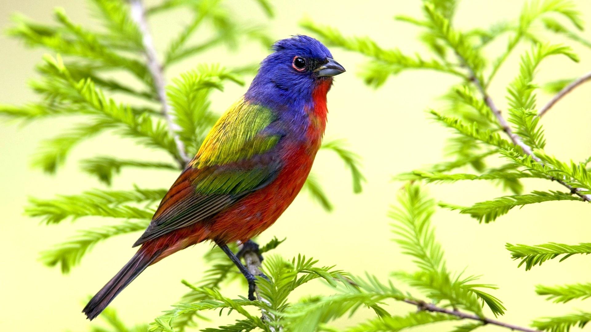 Fonds d'écran Oiseaux perroquet de printemps, branches ...