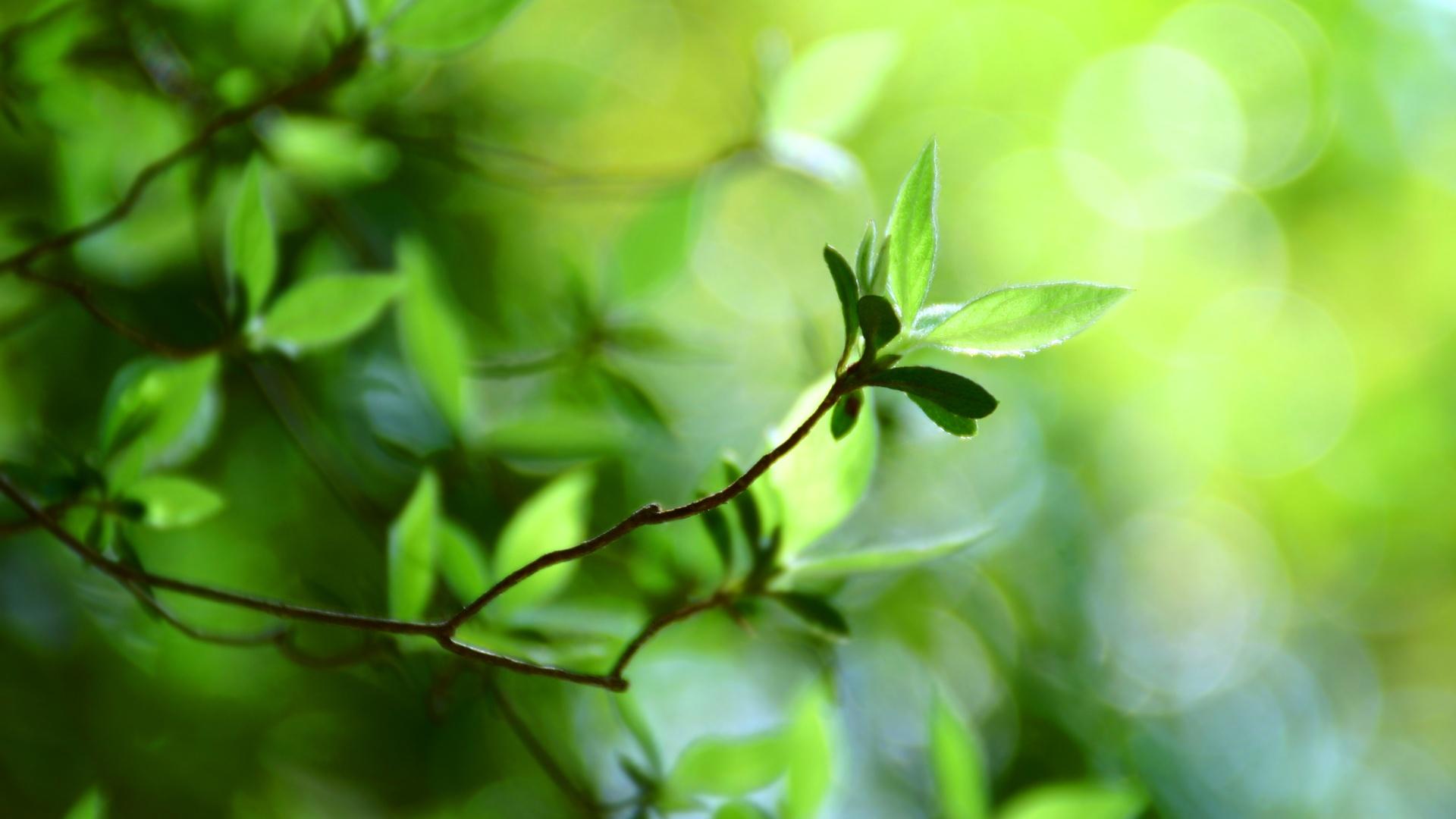 背景虚化的绿叶�...