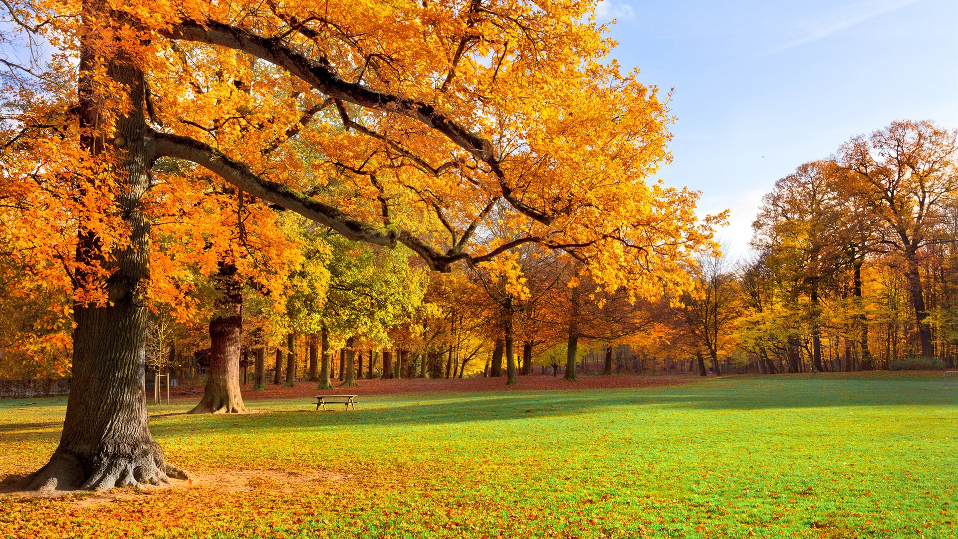 10 Latest Fall Country Backgrounds For Computer Full Hd: Natur Landschaft, Herbst, Park, Bäume, Gras, Sonne
