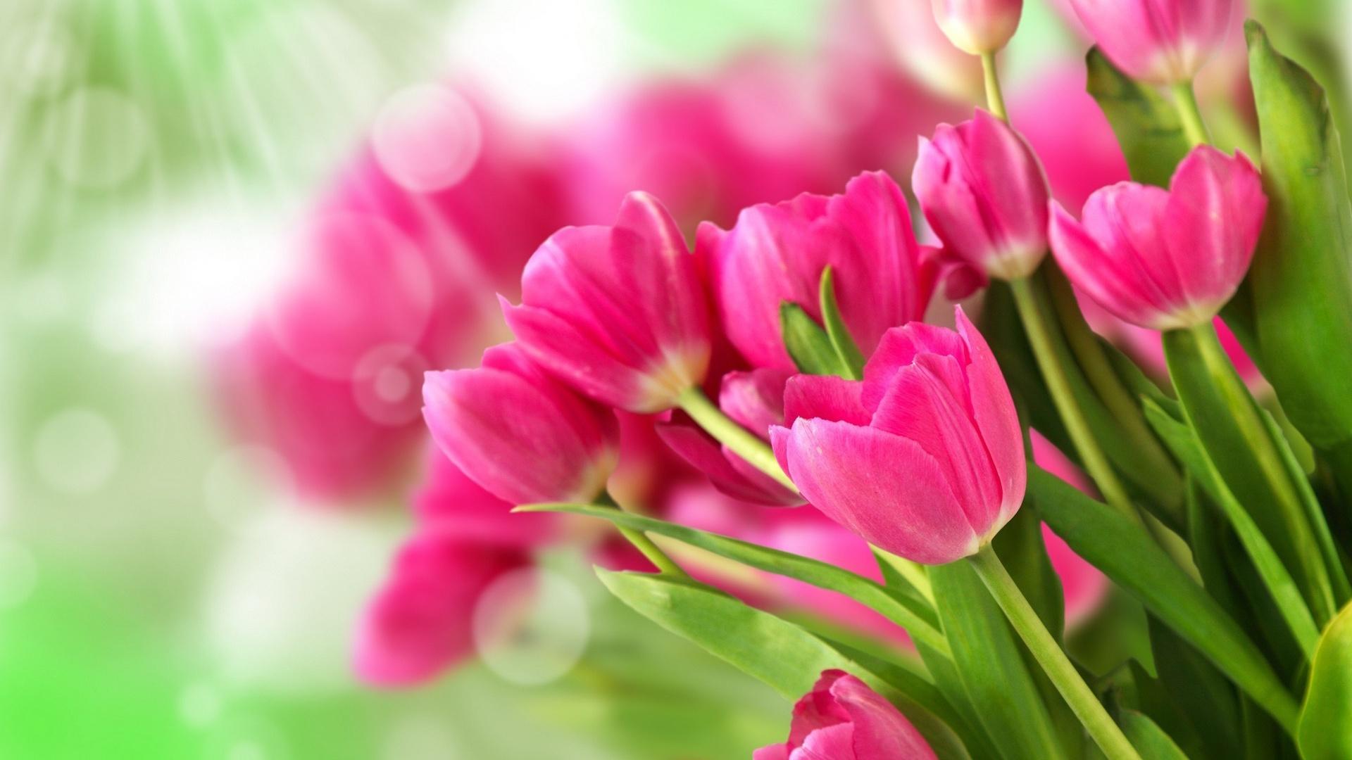 Розовые тюльпаны анонимно