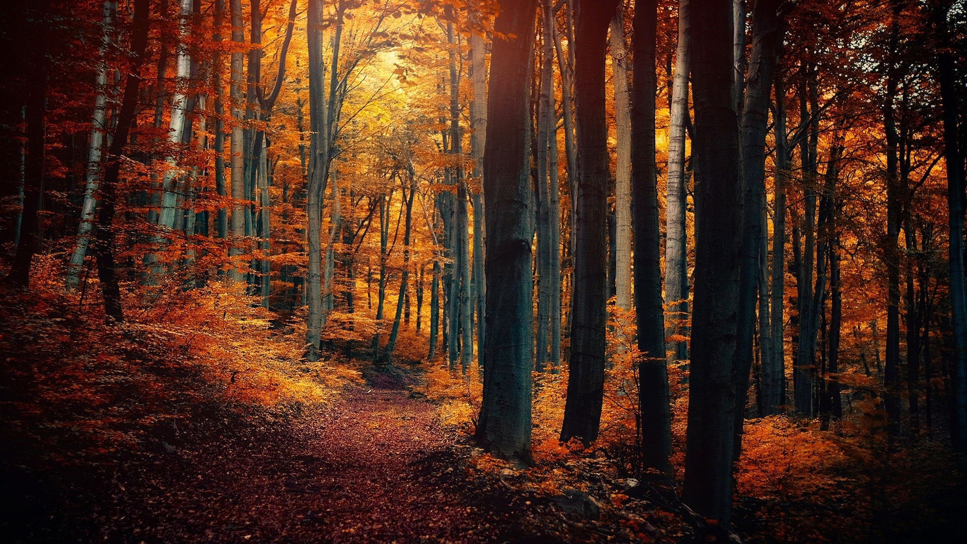 foto de Fonds d'écran Arbres d'automne de la forêt, les feuilles, orange ...