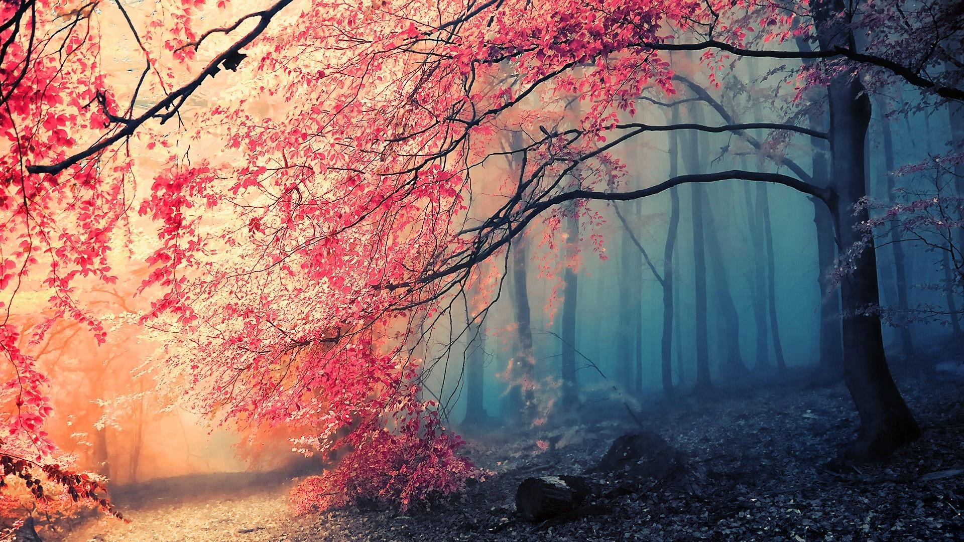 Schöne Bilder Hd
