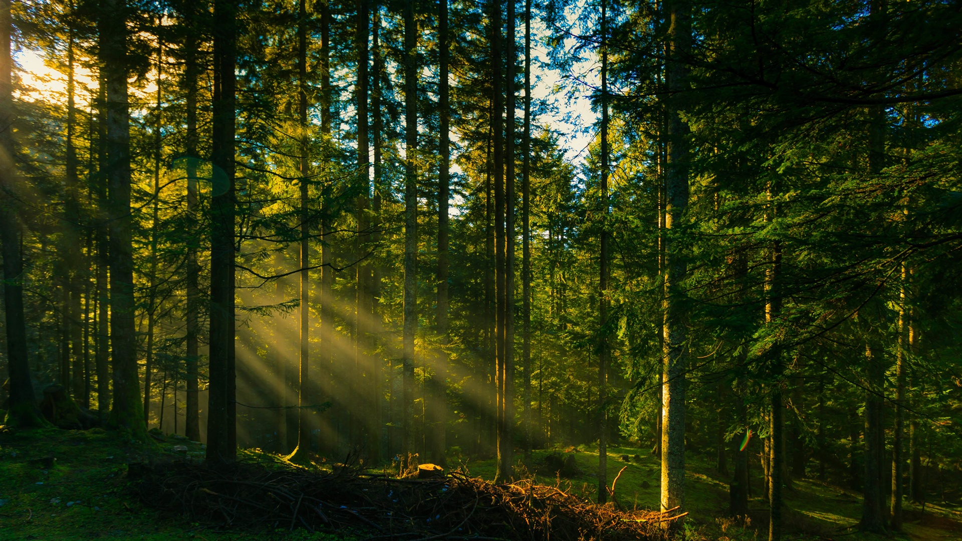wallpaper forest trees sun rays 2560x1440 qhd picture image