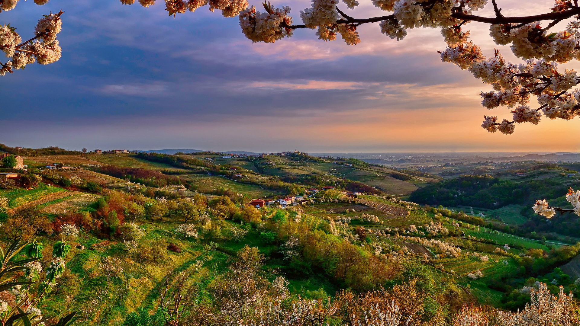 Wallpaper Italy Lombardy Collio At Spring Valley Dusk Flowers