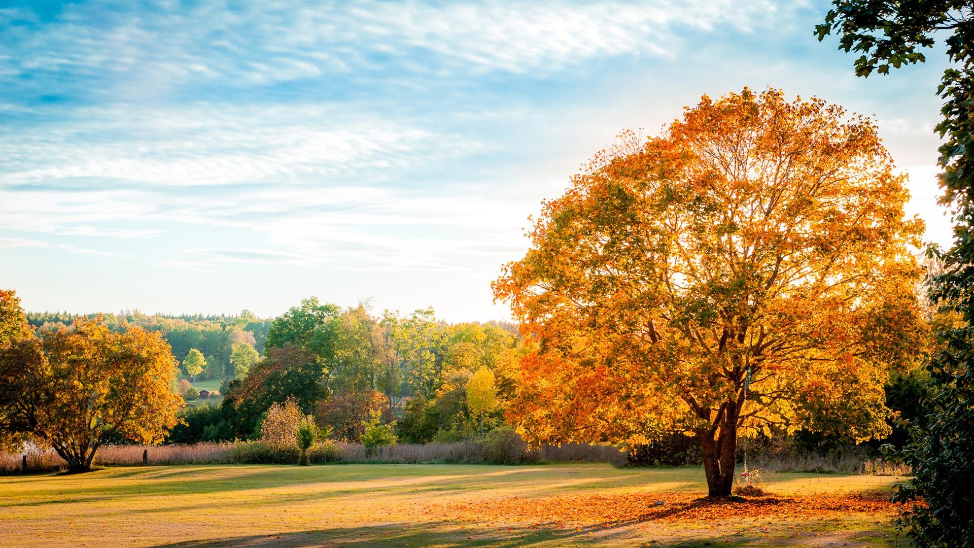 download live wallpapers hd wallpaper unionfonds du002639;u00e9cran paysage, automne de la nature, les arbres, les feuilles
