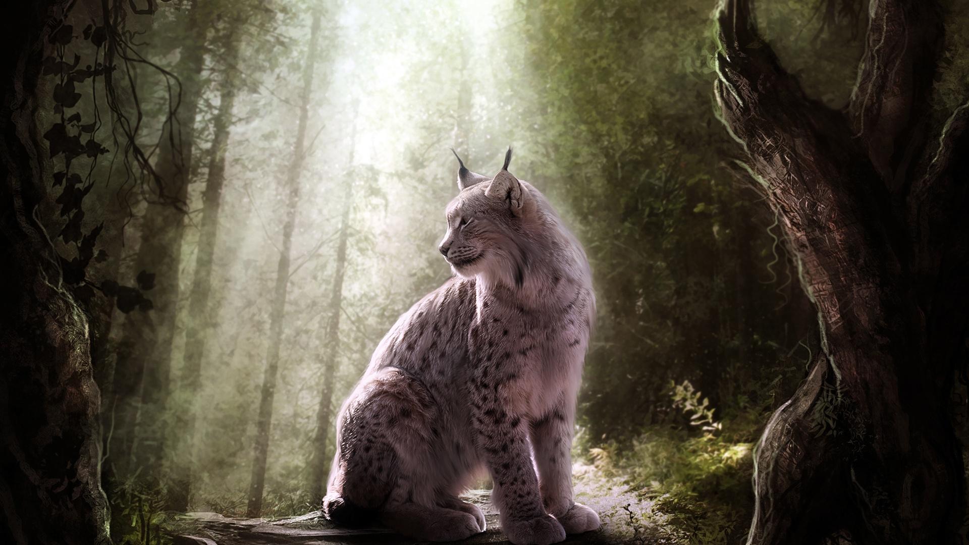 рысь, охота, лес бесплатно