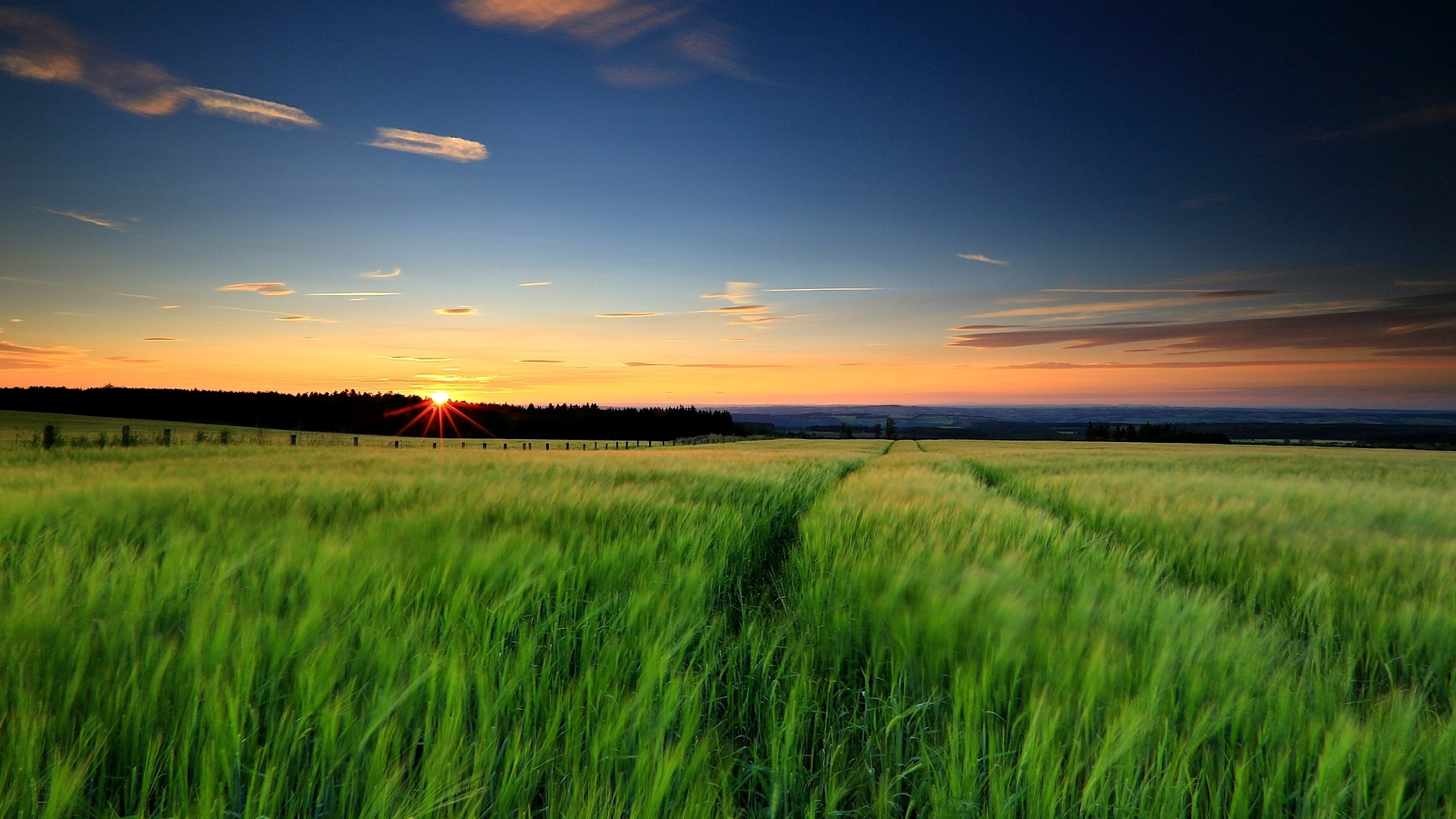 Wallpaper Nature Landscape, Green Grass, Wheat Fields