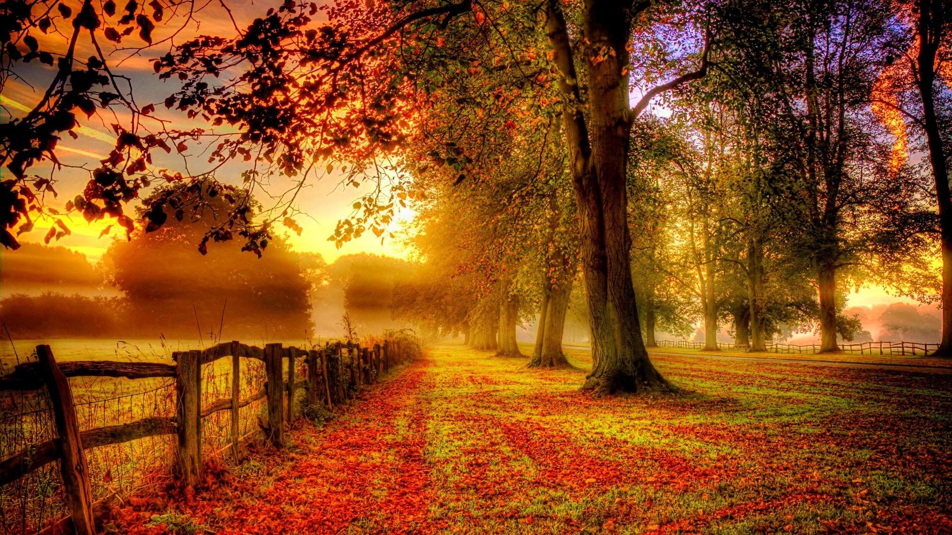 foto de Fonds d'écran parc paysage d'automne, les feuilles rouges, route ...
