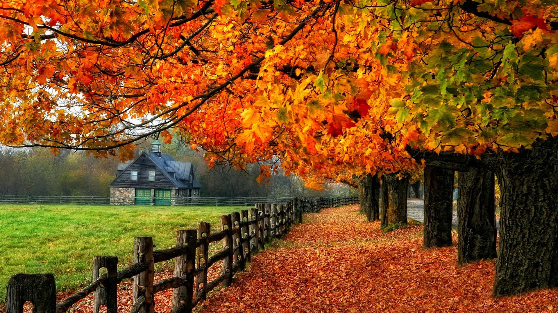 Hd wallpaper download 4k - Bunter Herbst Rote Bl 228 Tter Pfad Gras Haus