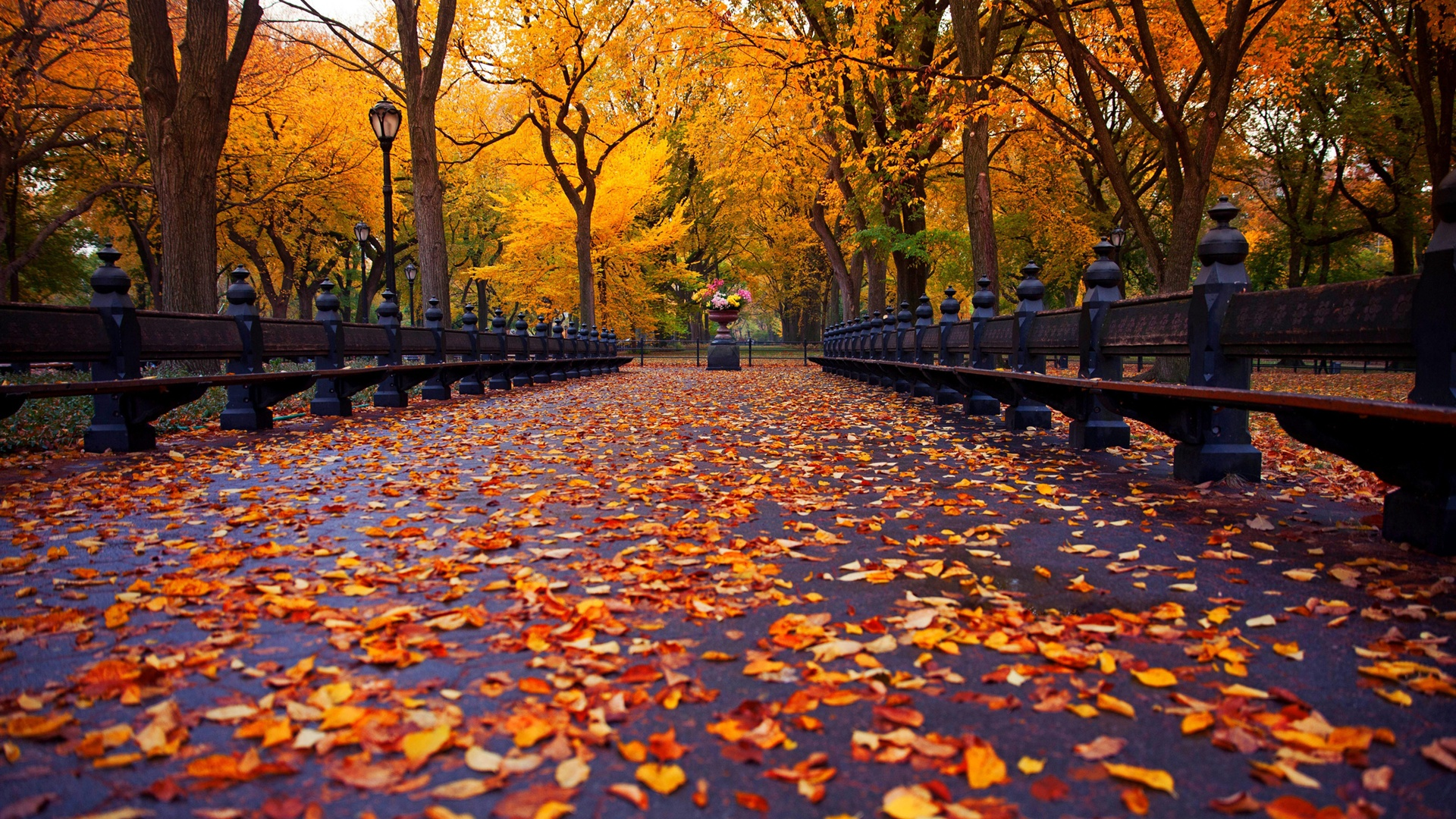 autumn park wallpaper 1920x1080 - photo #20