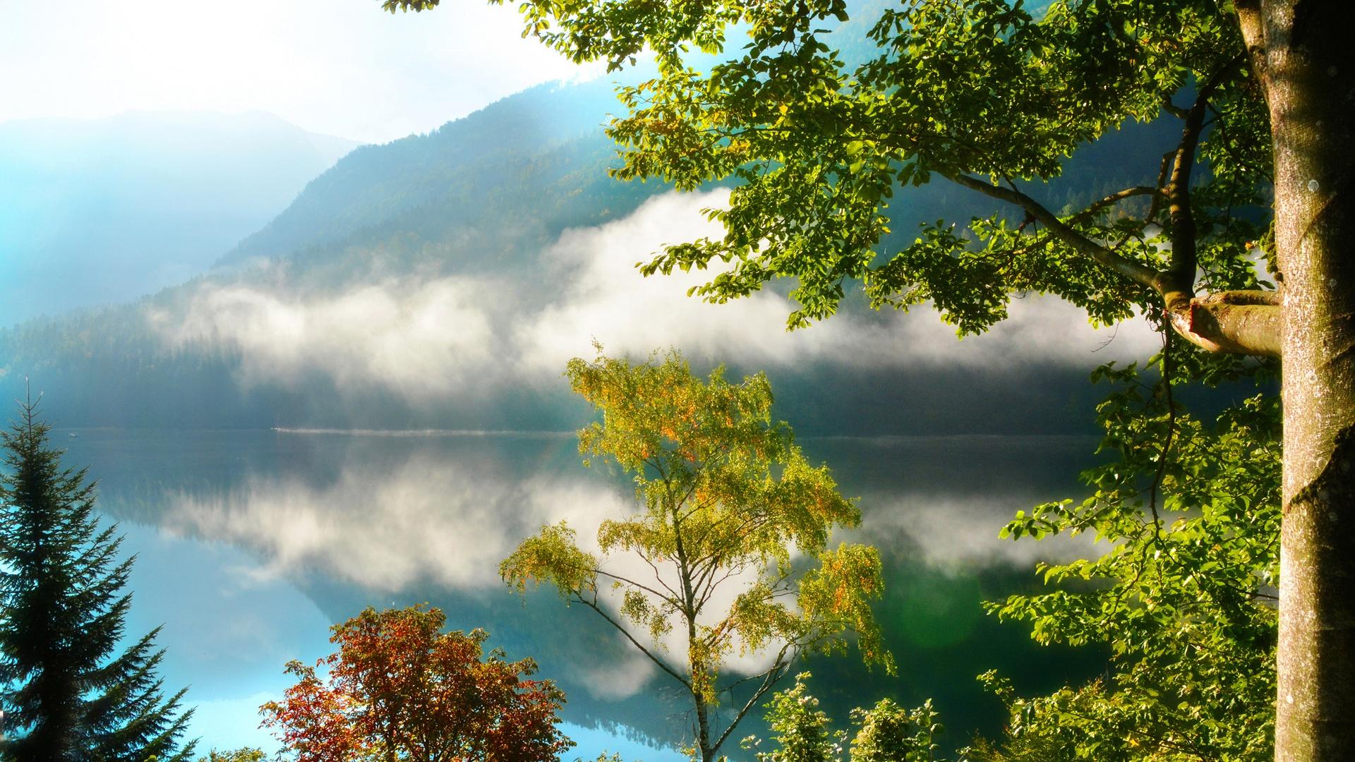 Горы лес деревья озеро туман утро