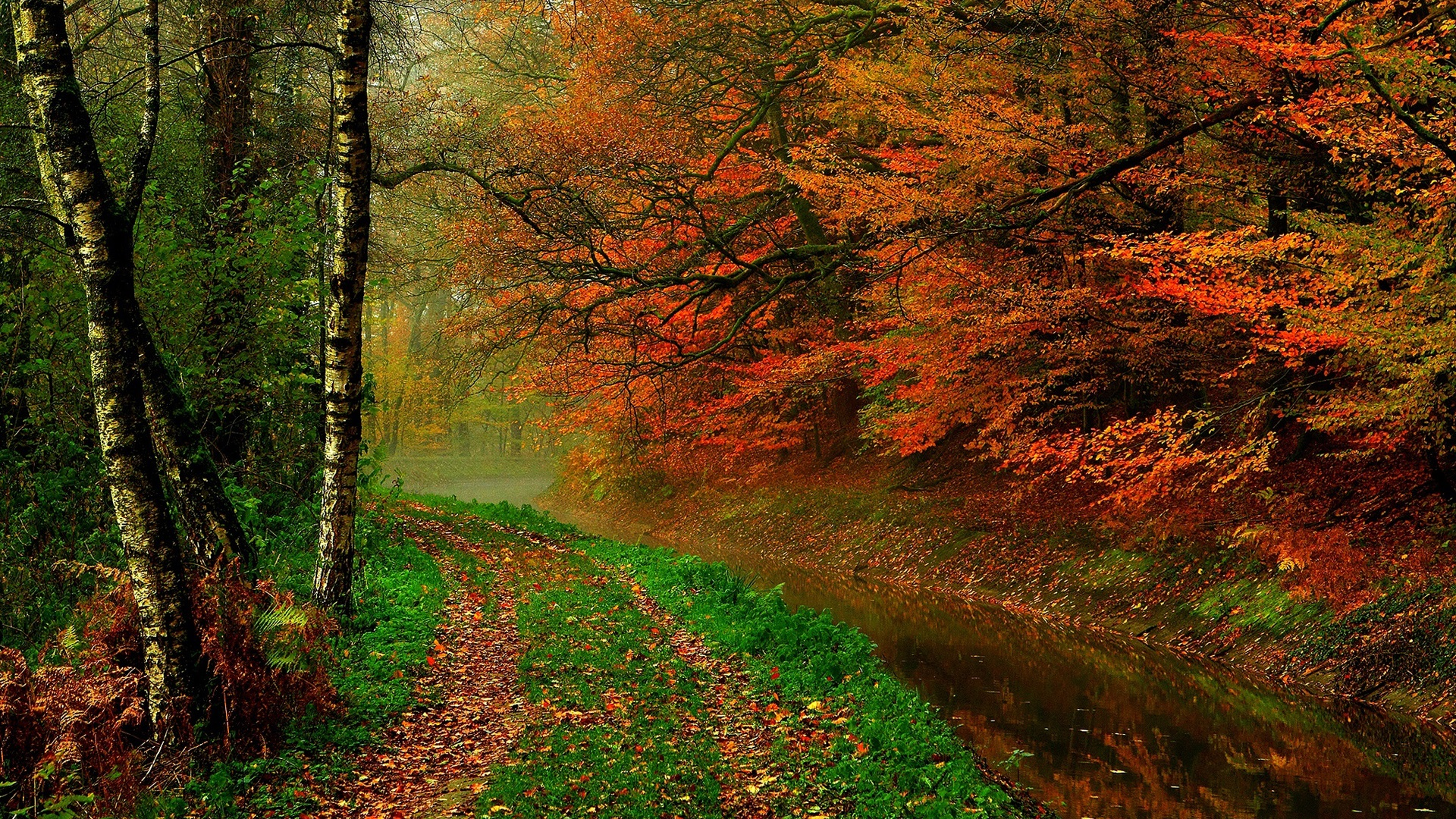 autumn leaf tree forest - photo #16
