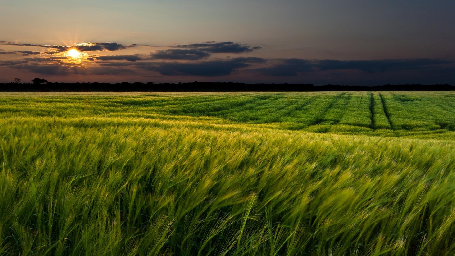 природа трава поле на телефон
