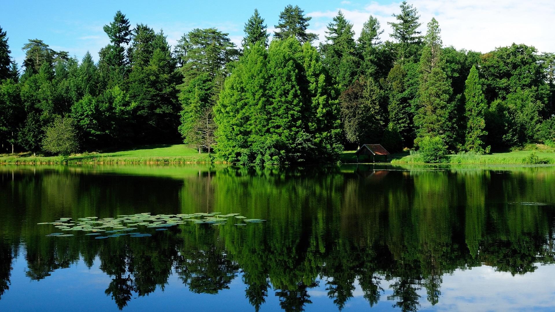 法國,自然景觀,樹木,綠地,湖泊,水中的倒影